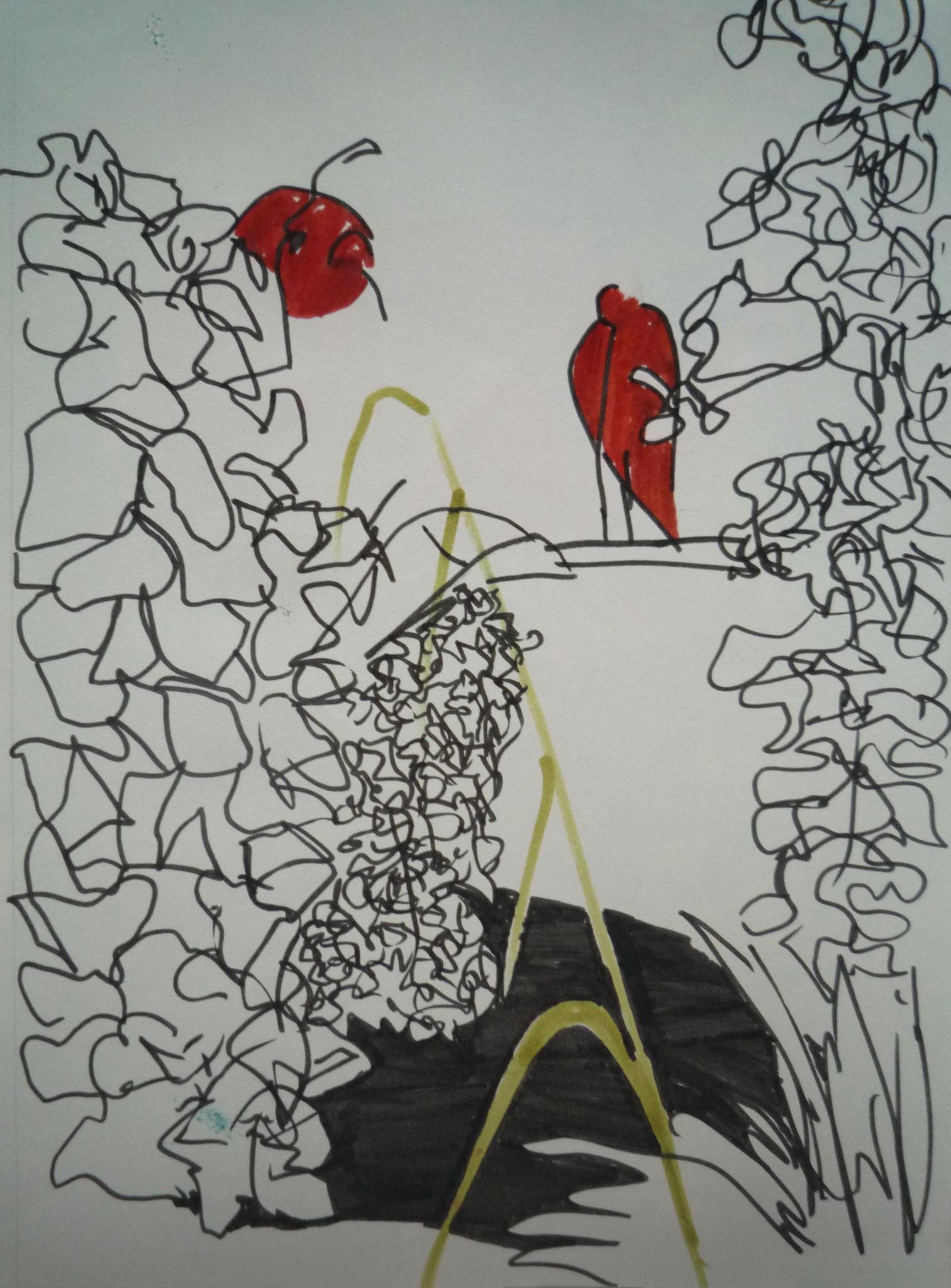 Croquis Ibis de la ménagerie du jardin des plantes.