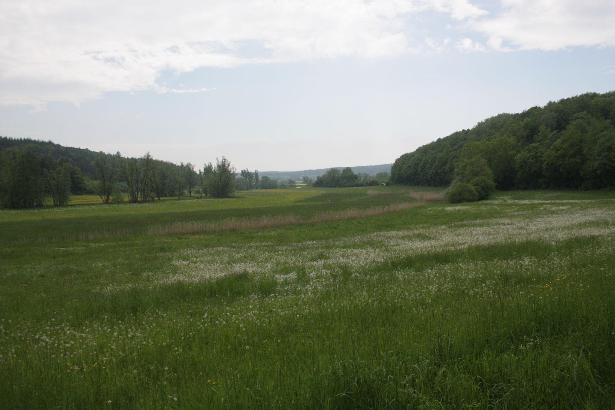 In den Heiligenwiesen bietet das Rodachtal nicht nur Lebensraum für Wiesenbrüter,... (c) Alex Ulmer