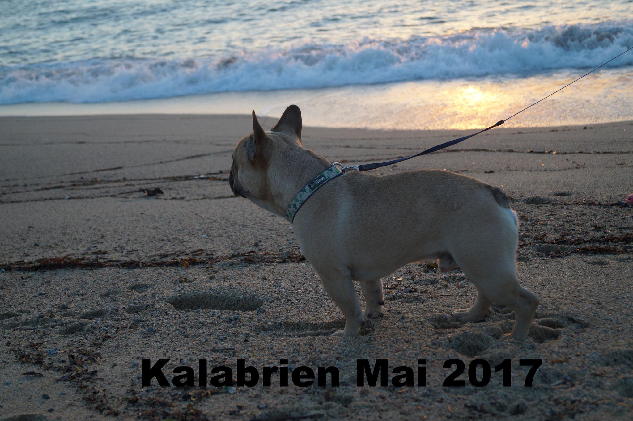 Kalabrien Mai 2016