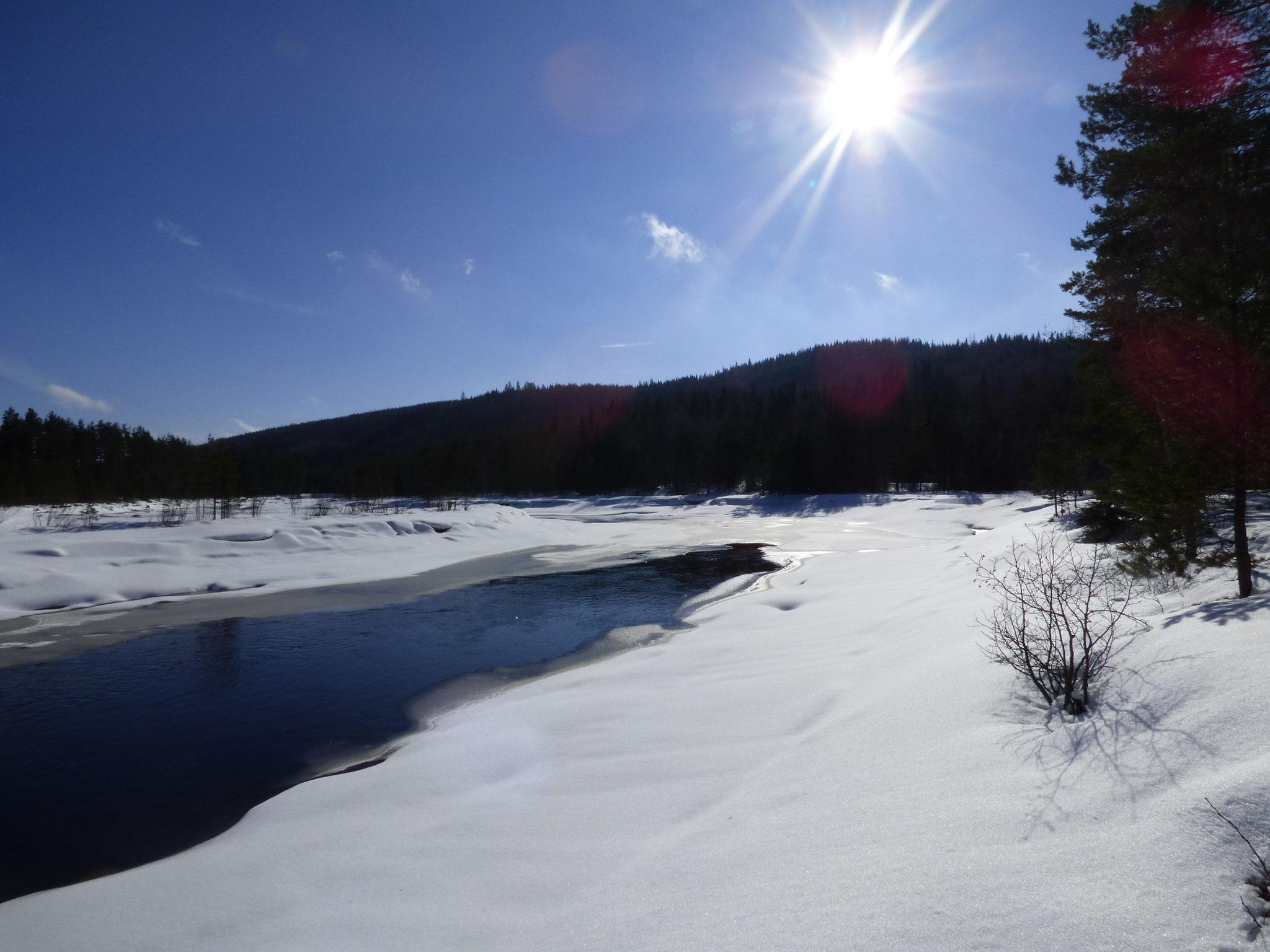 Camping Nya Skogsgården - das Leben kehrt zurück