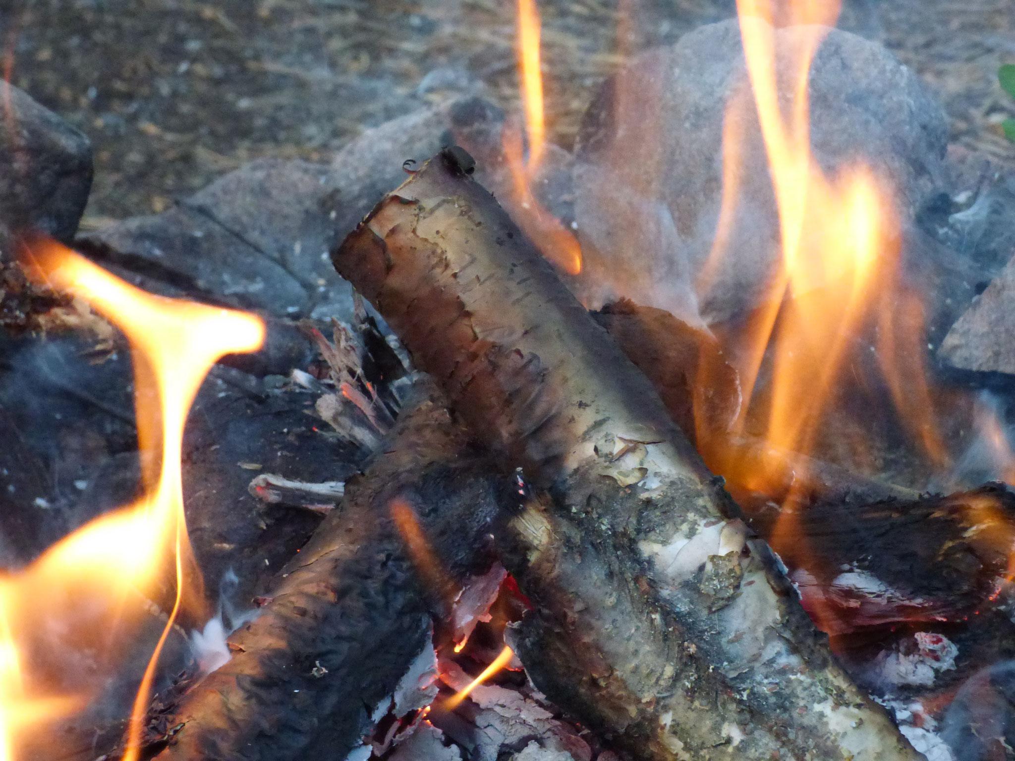 campfire on Nya Skogsgården