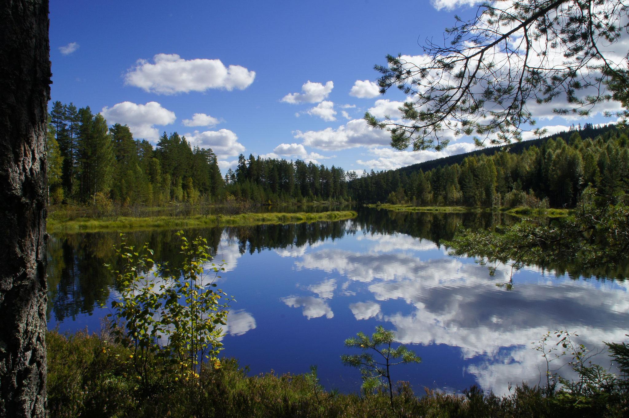 Rottnan - Nya Skogsgården
