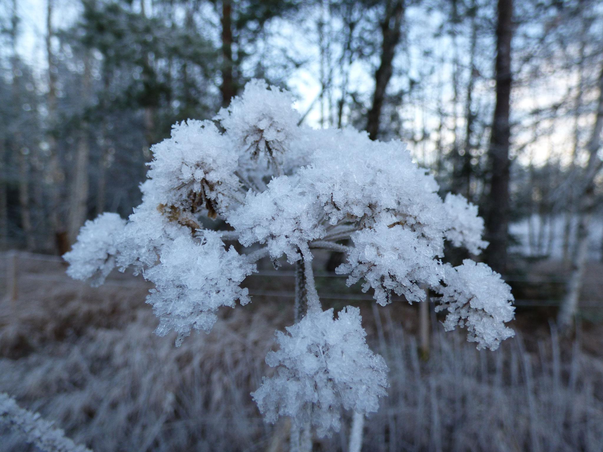 Nya Skogsgården - Winterblumen