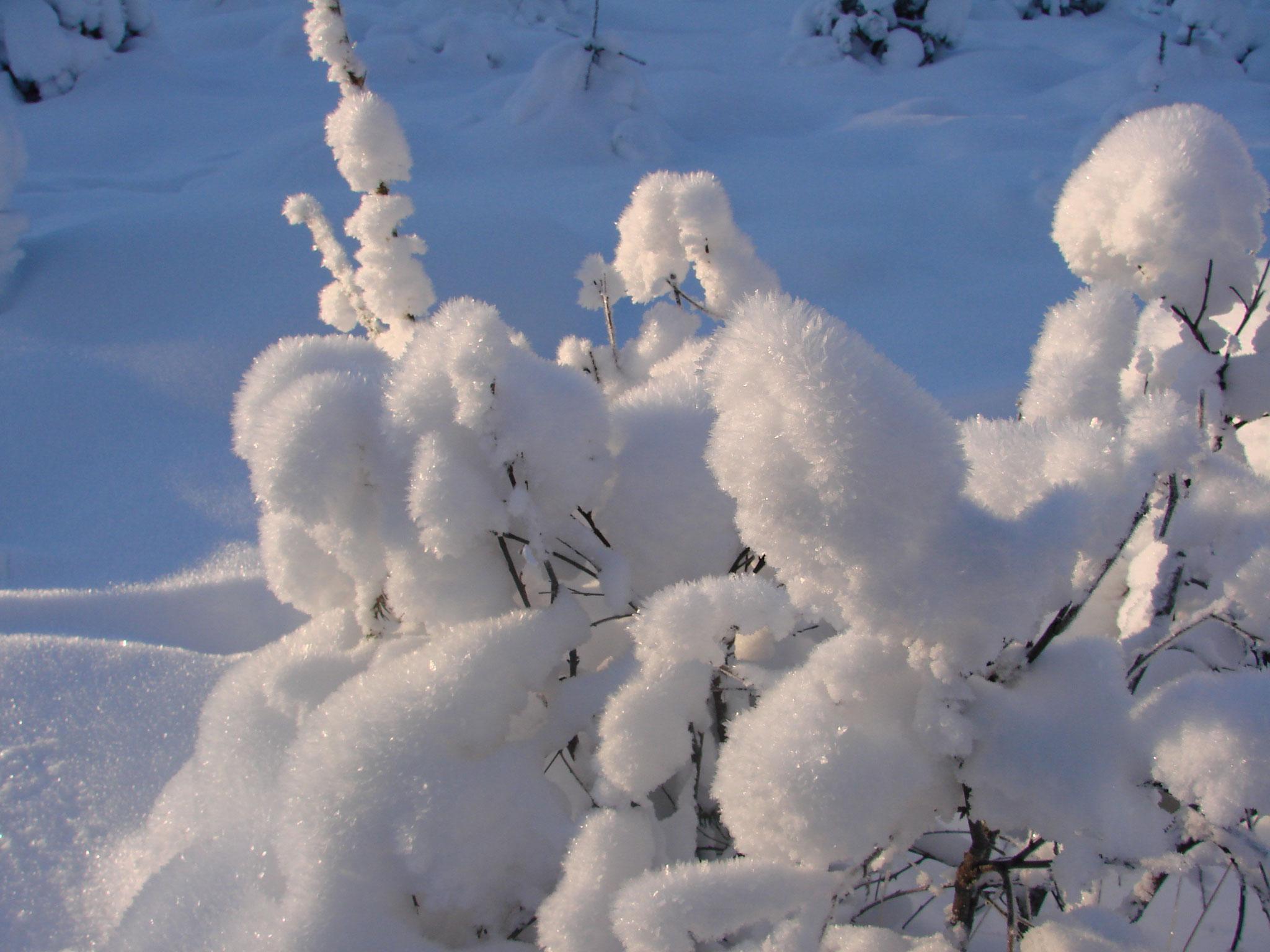 Winter wie Baumwolle