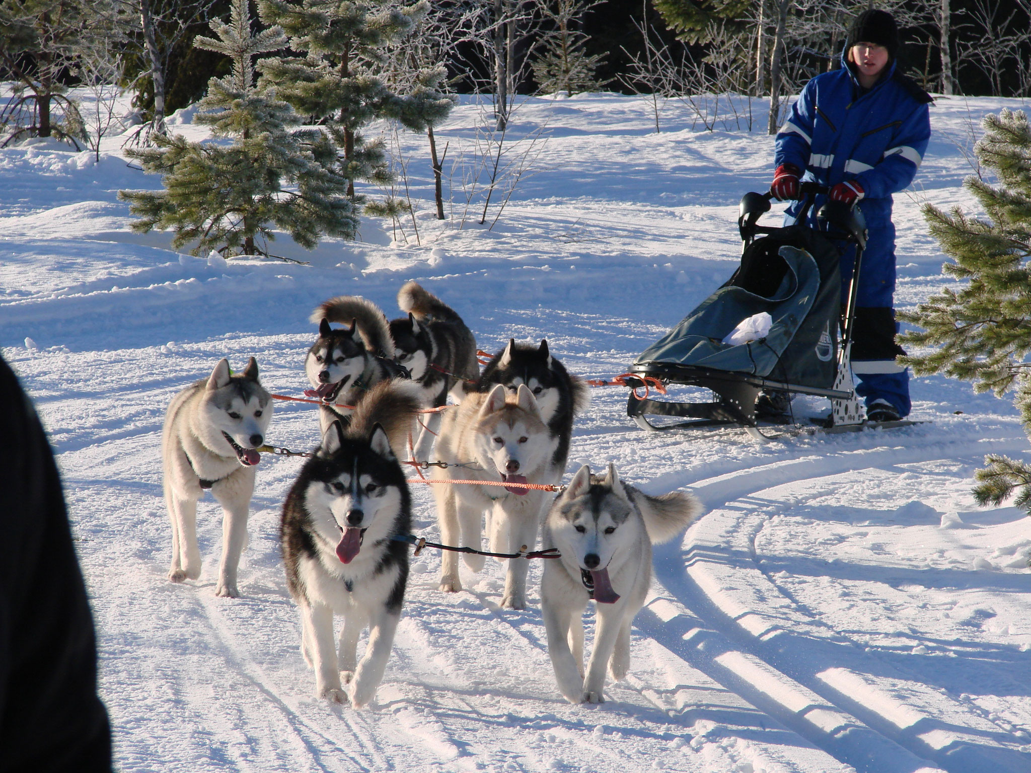 sled dogs race on Rabakkoberg