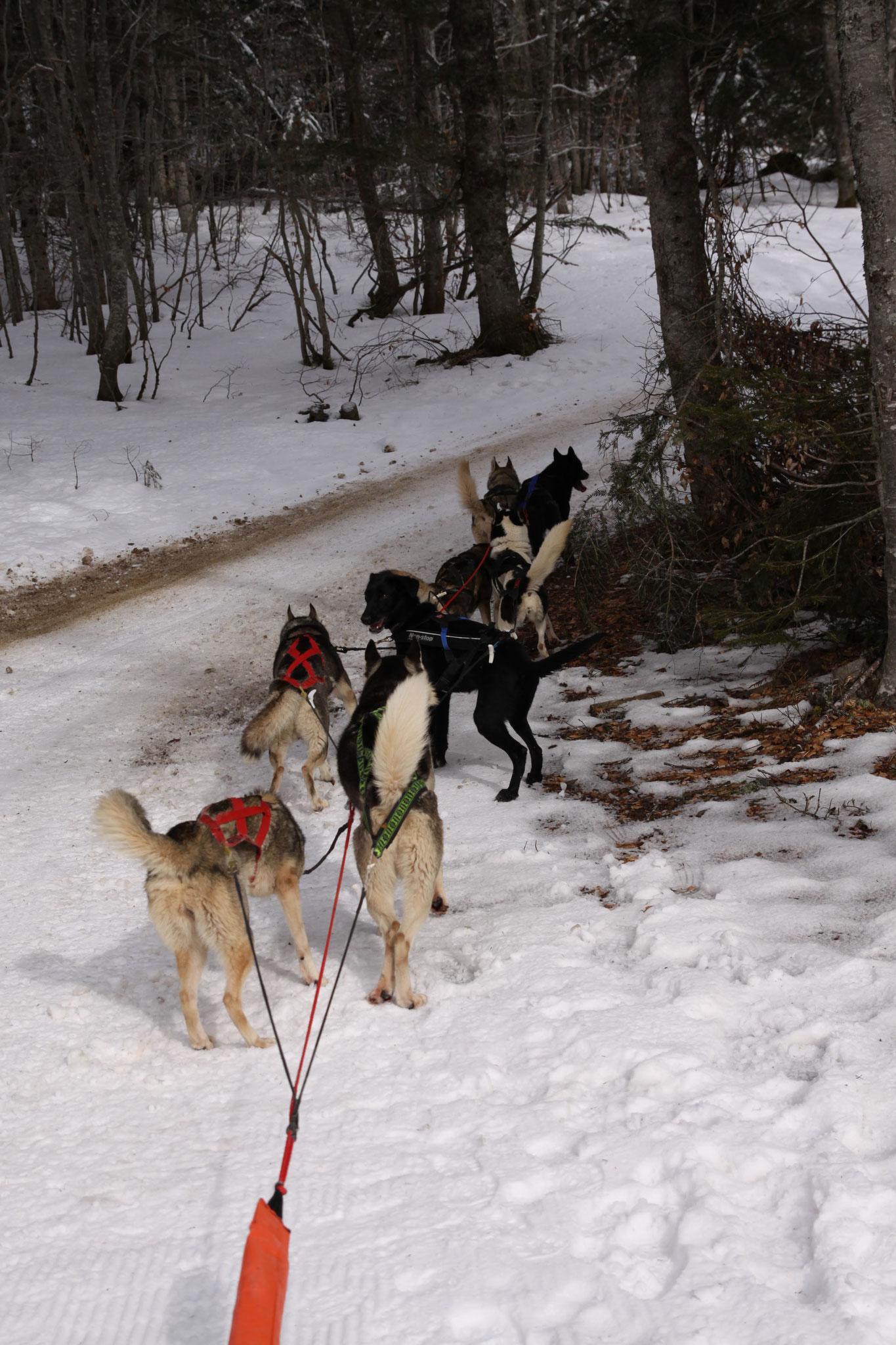 Des gentils chiens qui attendent sagement que je reprenne place sur le traineau