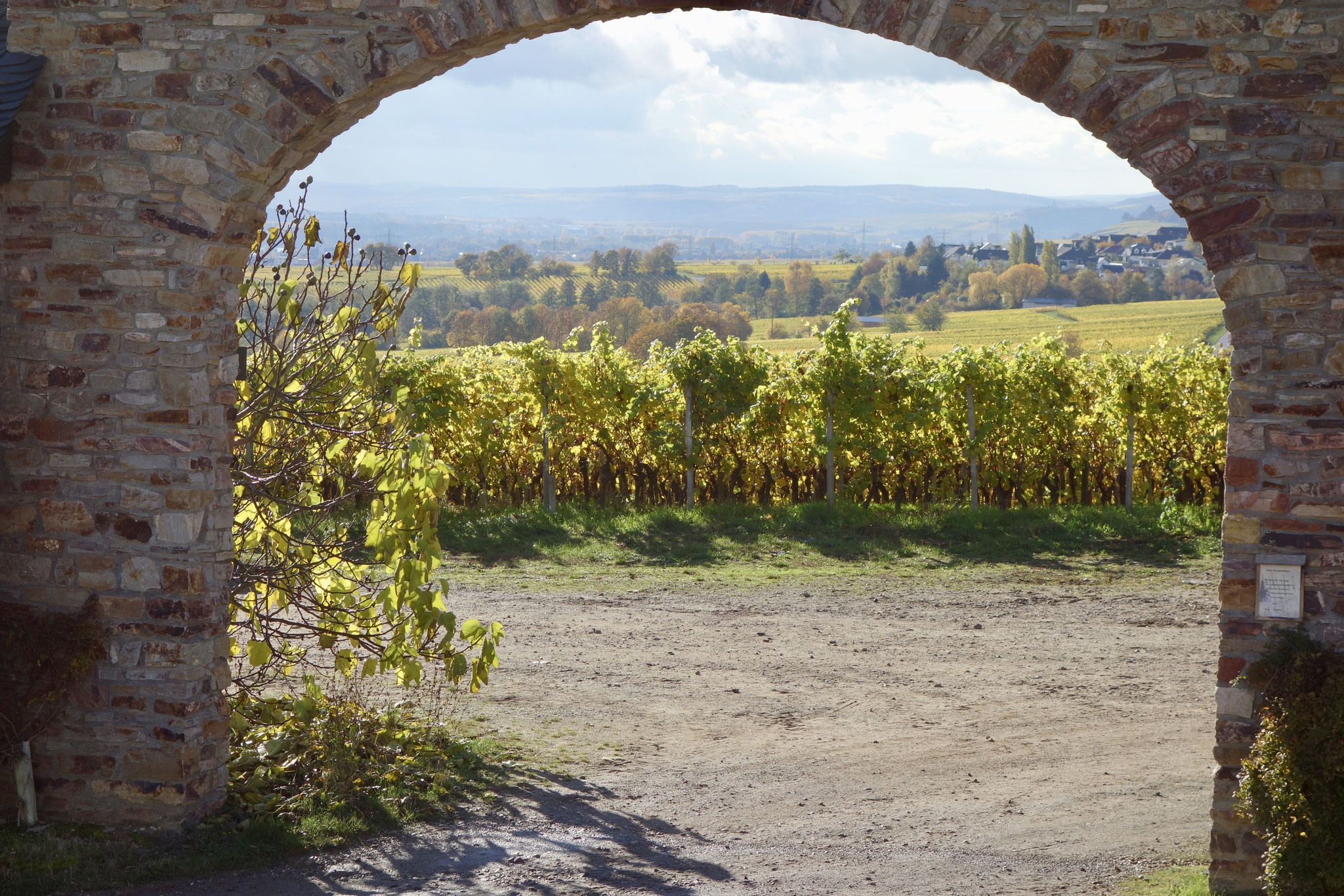 A view of the famous Steinberg vineyard
