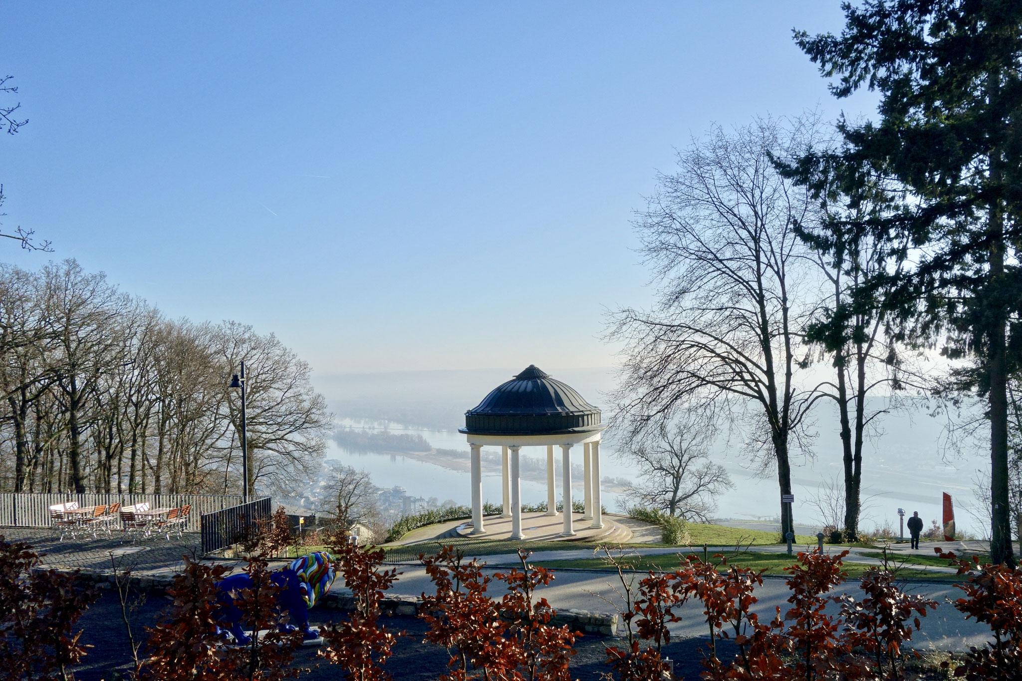 Rheingau in winter