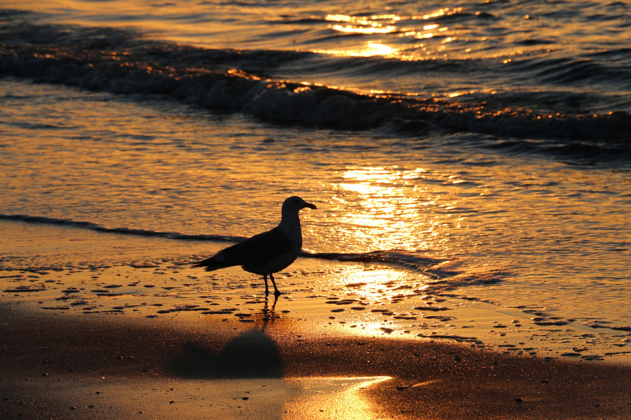 Travleblog, Norderney Beach Sea Sunset