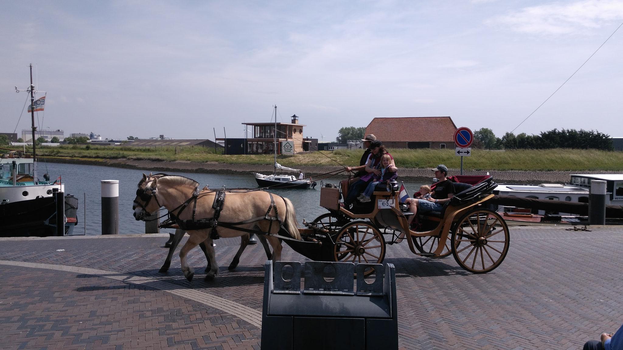 Mobil in der Kutsche (Rundfahrt 5 €/Person)