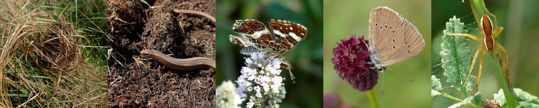 Ein Beitrag zum Erhalt der Biodiversität