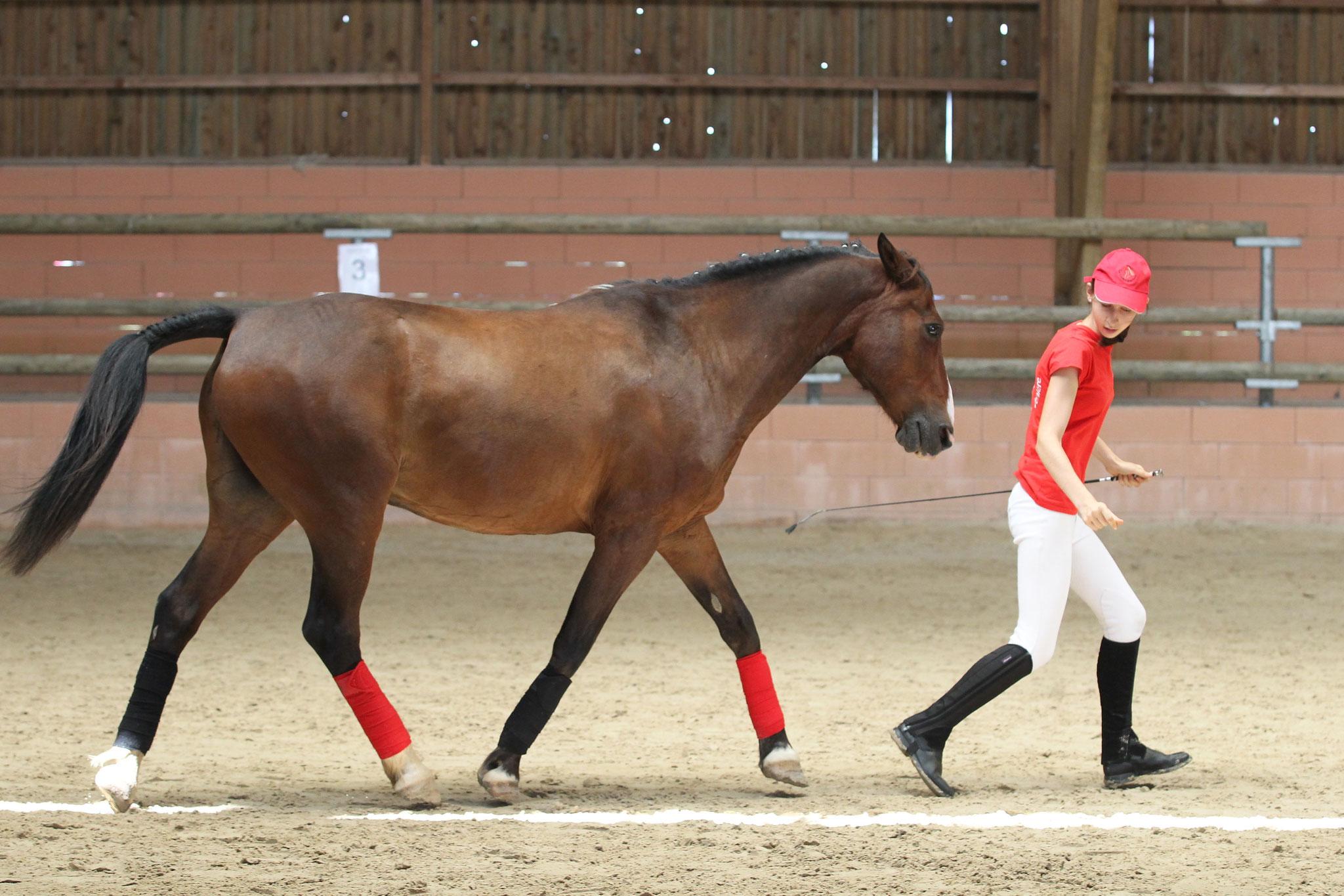 Avec cheval, de nombreuses activités sont possibles