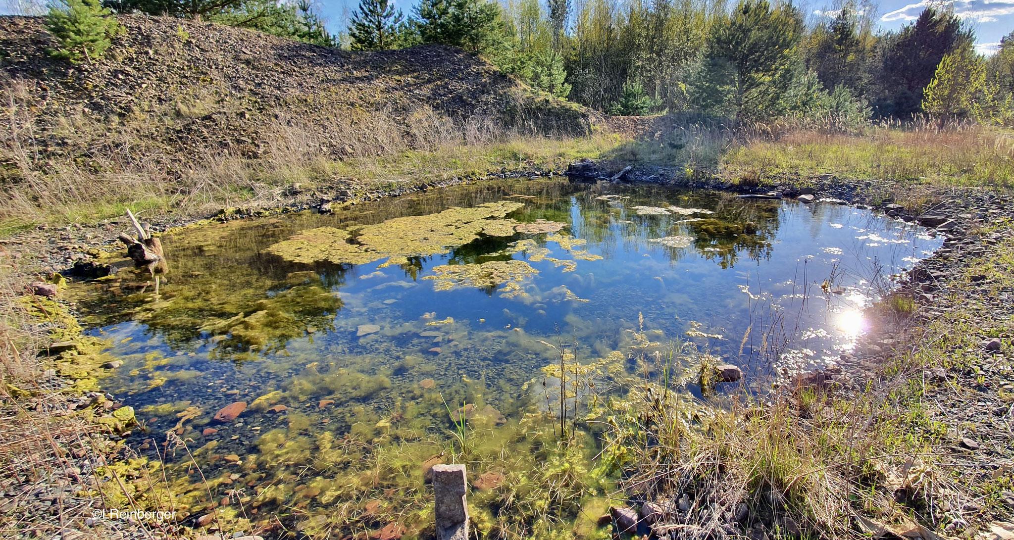 eines der angelegten Gewässer Foto: NABU/L. Reinberger
