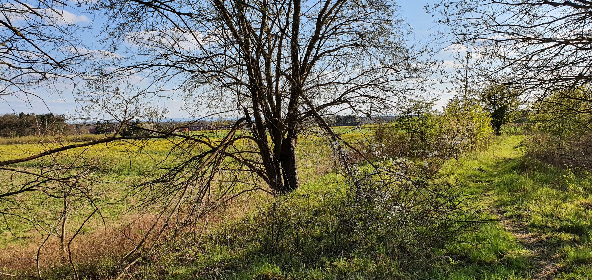 Blühstreifen um das NABU Gelände Foto:NABU/L. Reinberger
