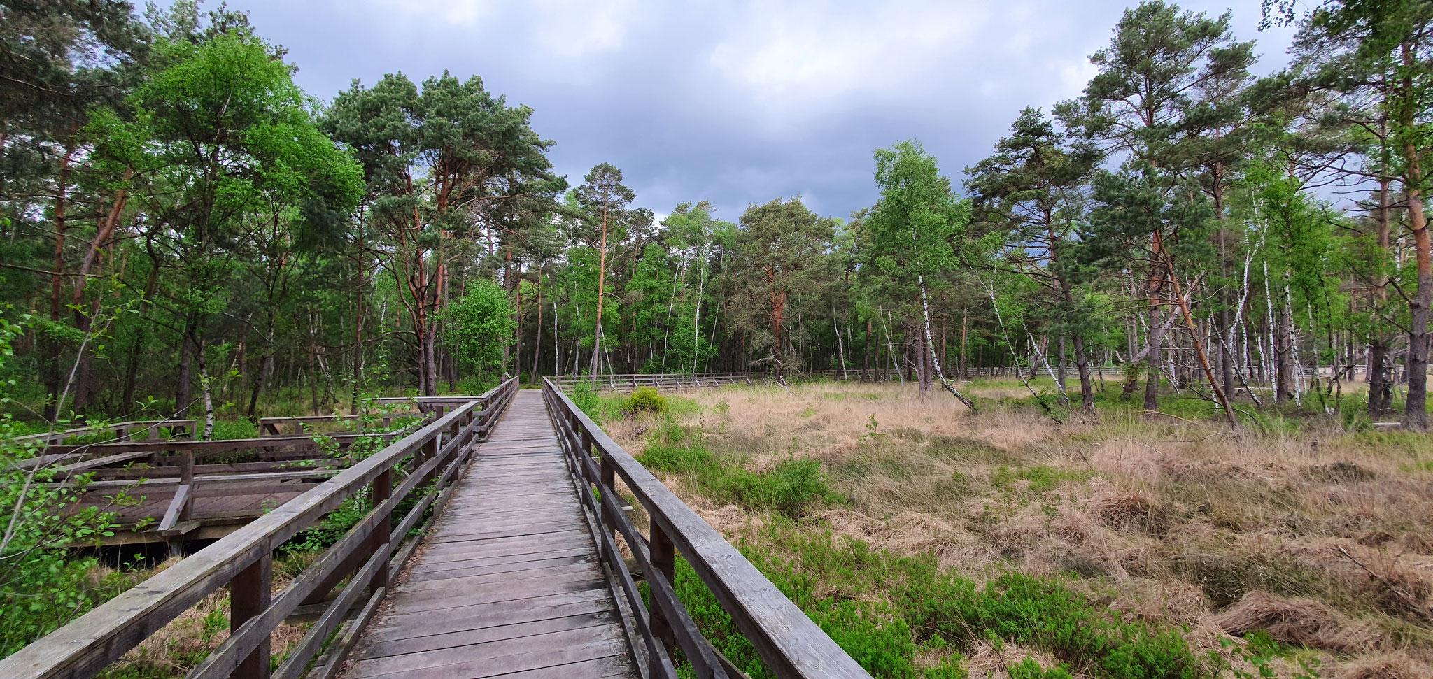 Ausblick auf den Moor-Erlebnispfad, Foto:NABU/L.Reinberger