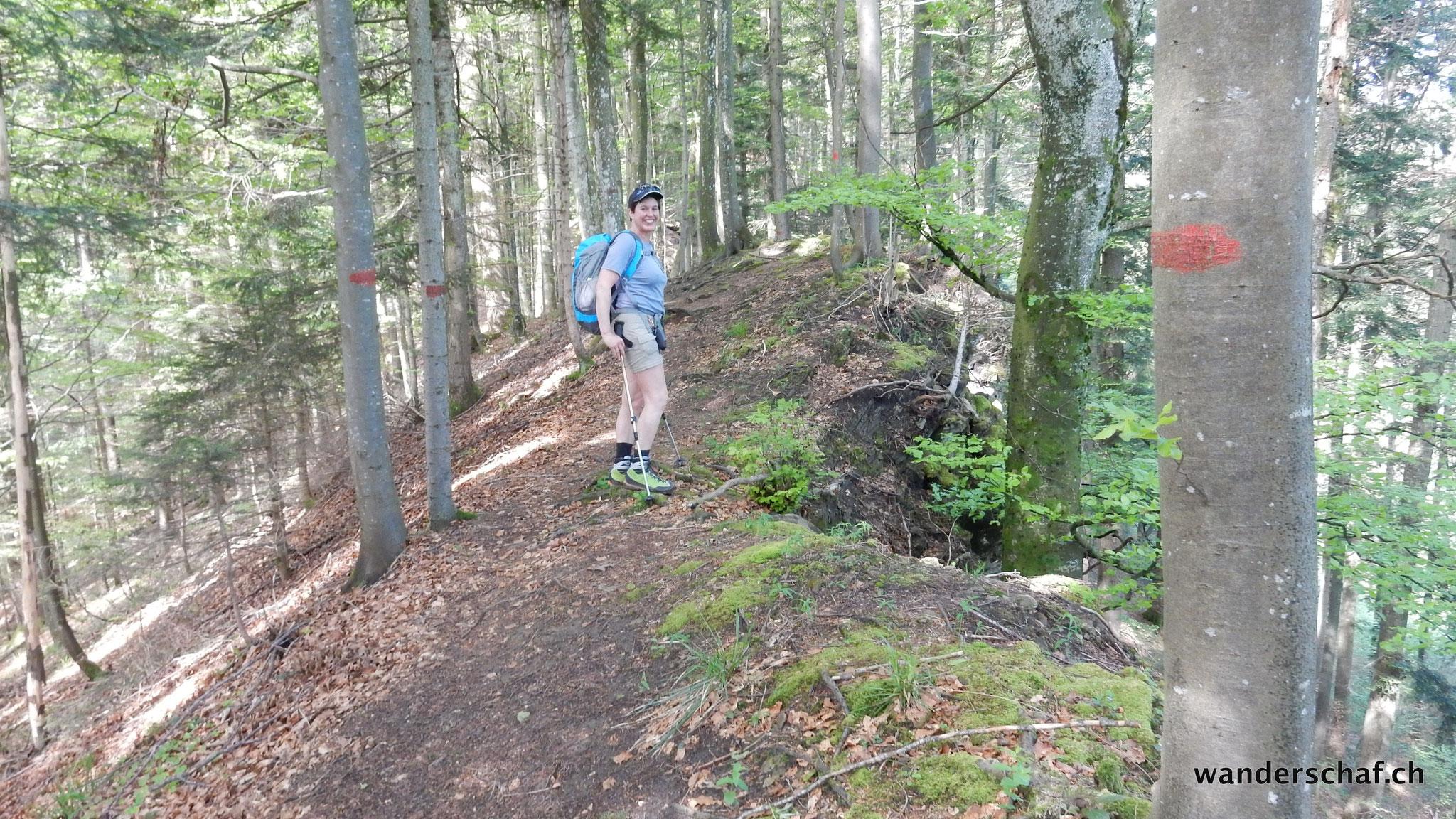 schöner Aufstieg auf dem Grat durch den Langwald....ein Geheimtipp bei Einheimischen und wir haben's per Zufall gefunden