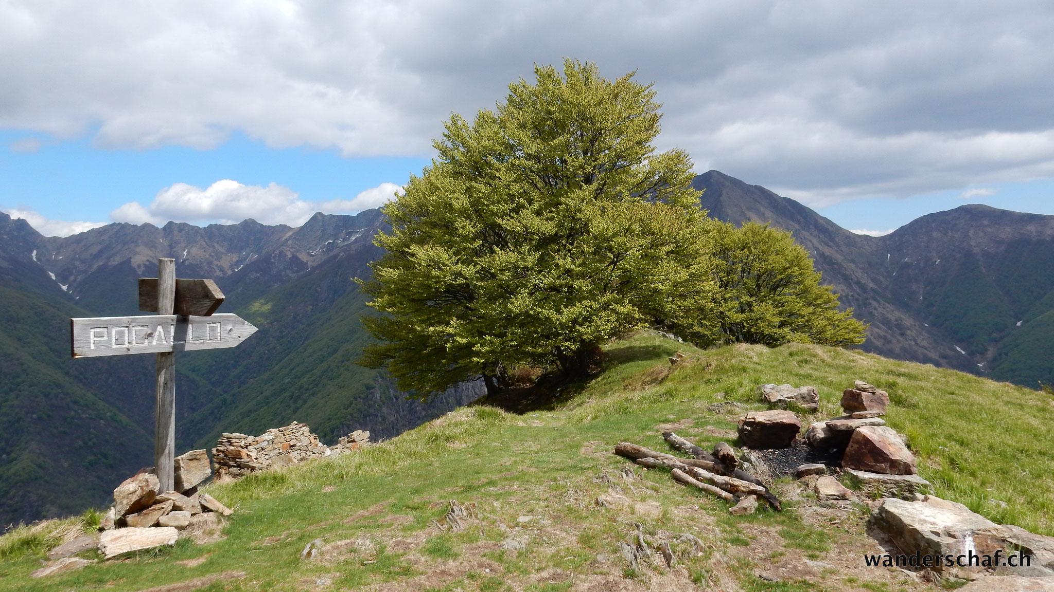 oberhalb Alpe Leciurt