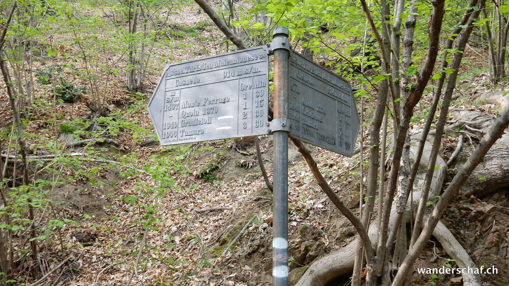 Abstieg durchs Unterholz....ah, da war früher doch einmal ein offizieller Weg!