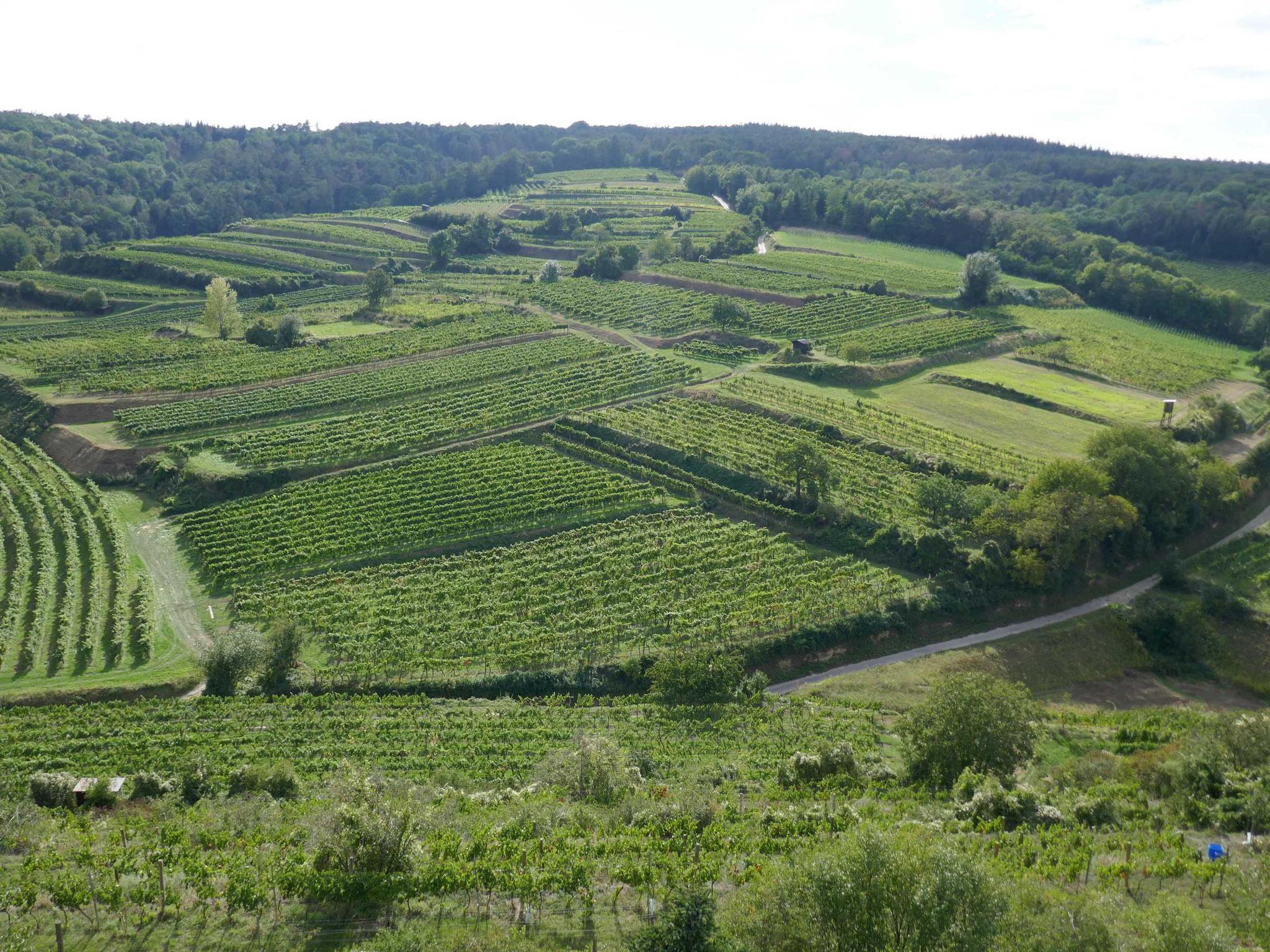 Weingut Linder, Weinbergwanderung
