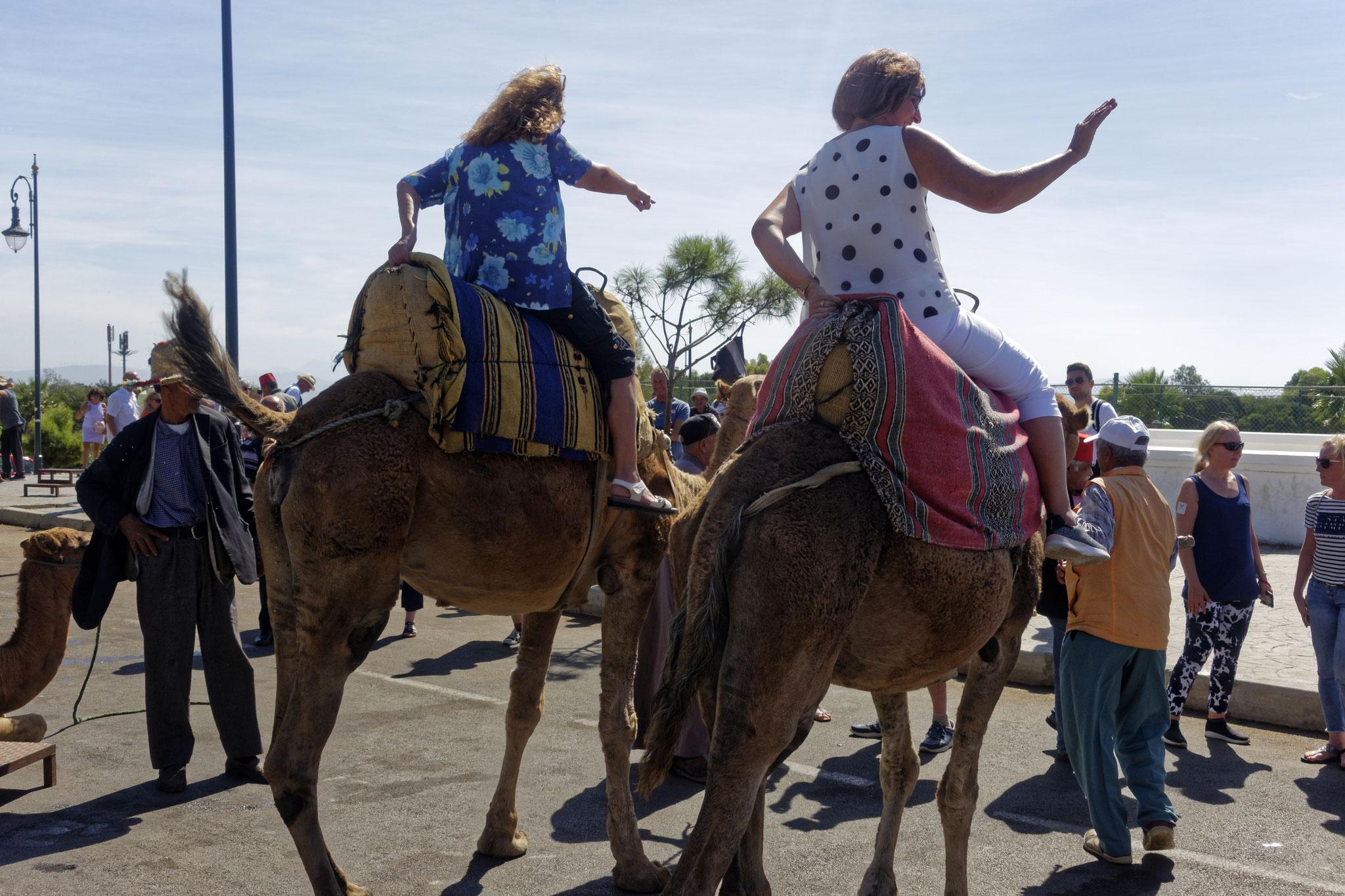 Kamele für Touristen