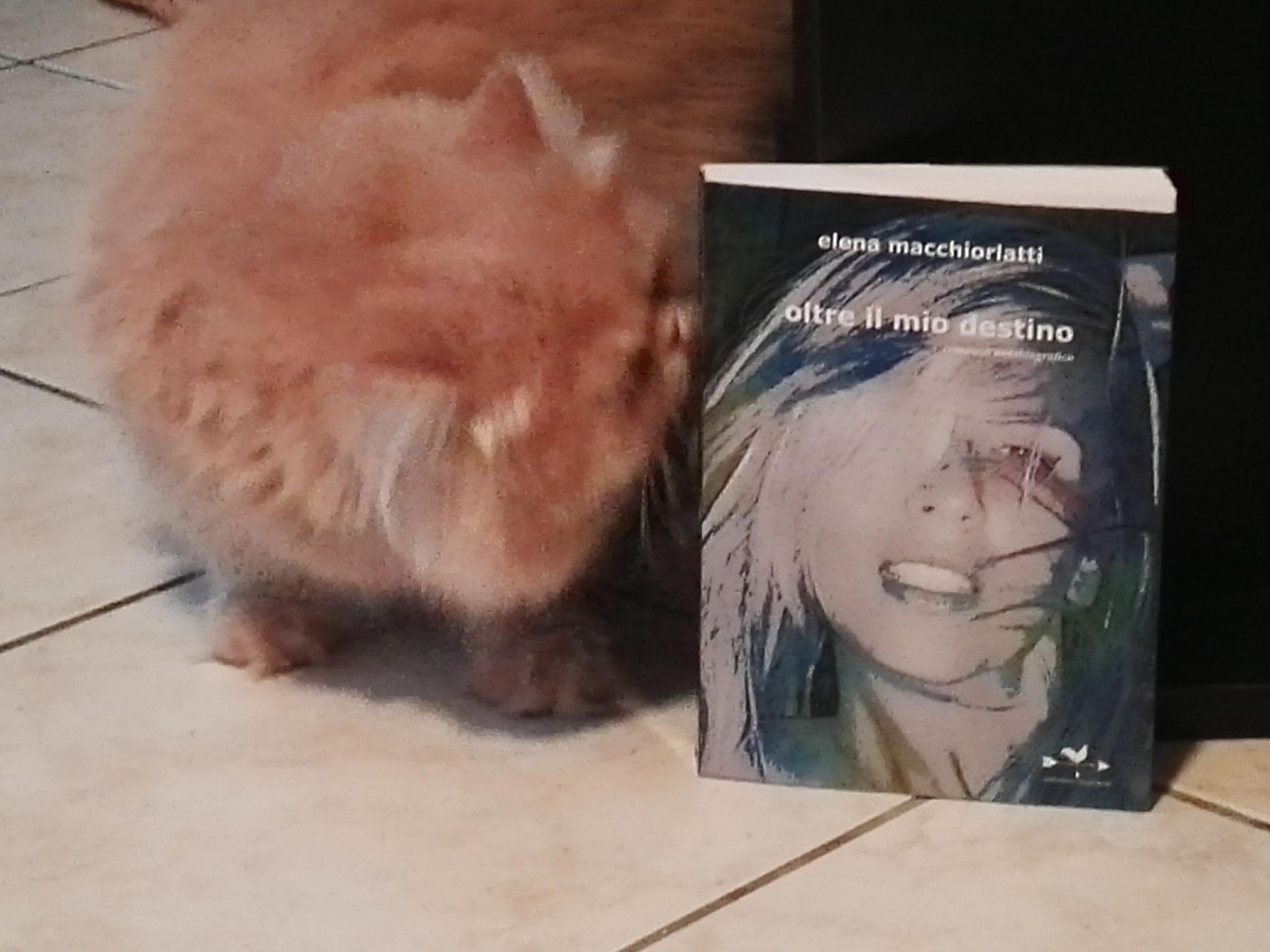 Gatto di Monica legge Oltre il Mio Destino
