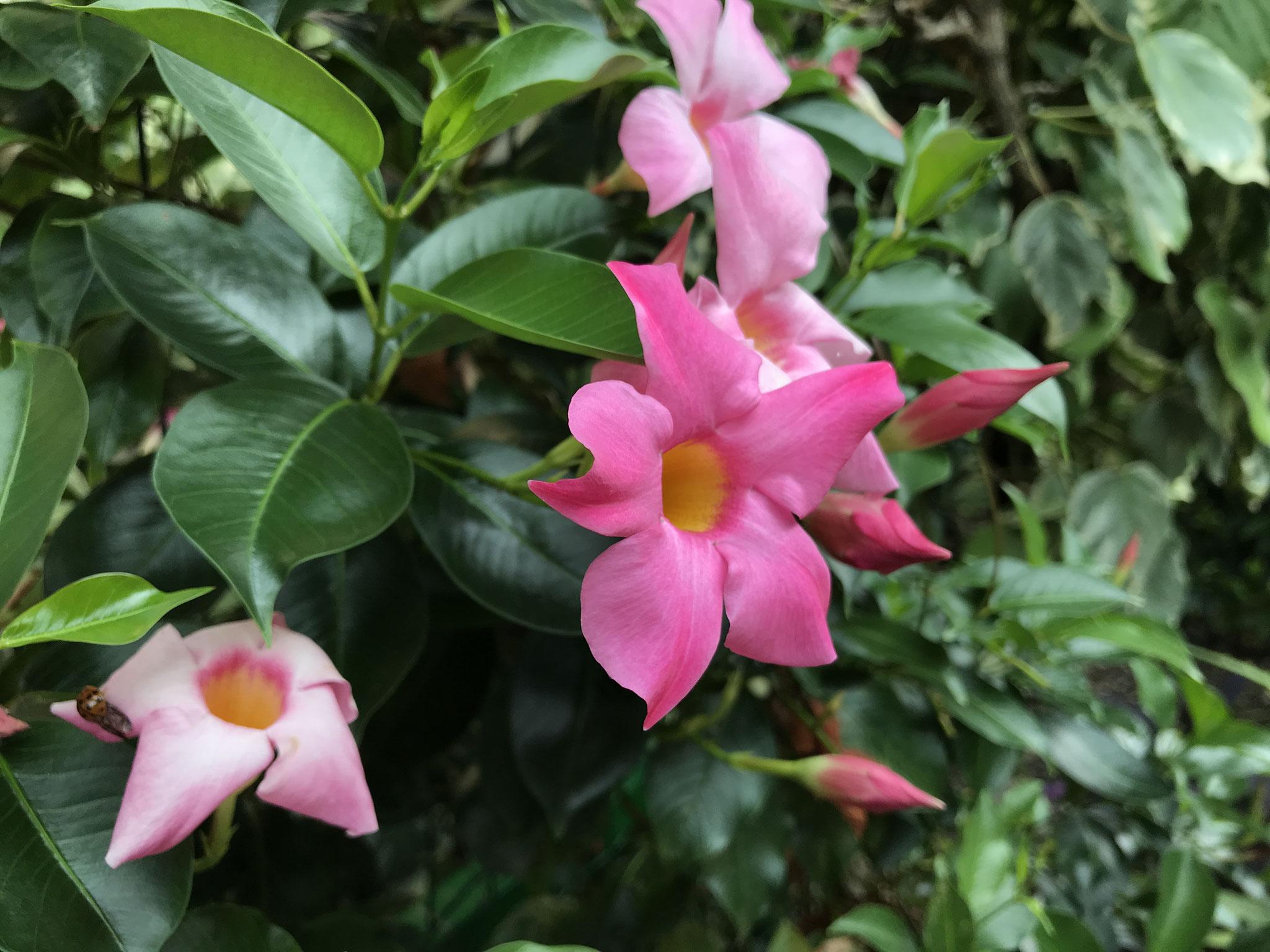 Für Margrit - ein Gruß an Deinen Garten.