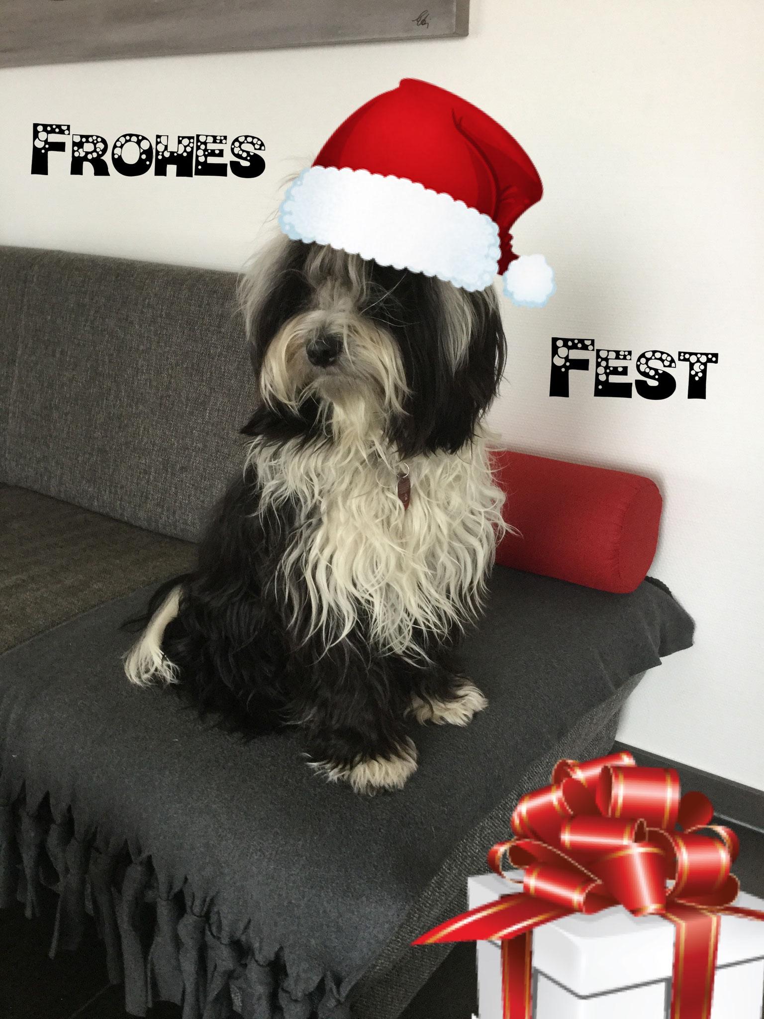 Akani der Weihnachtself äääh Hund, schickt euch liebe Grüße aus dem Emsland !