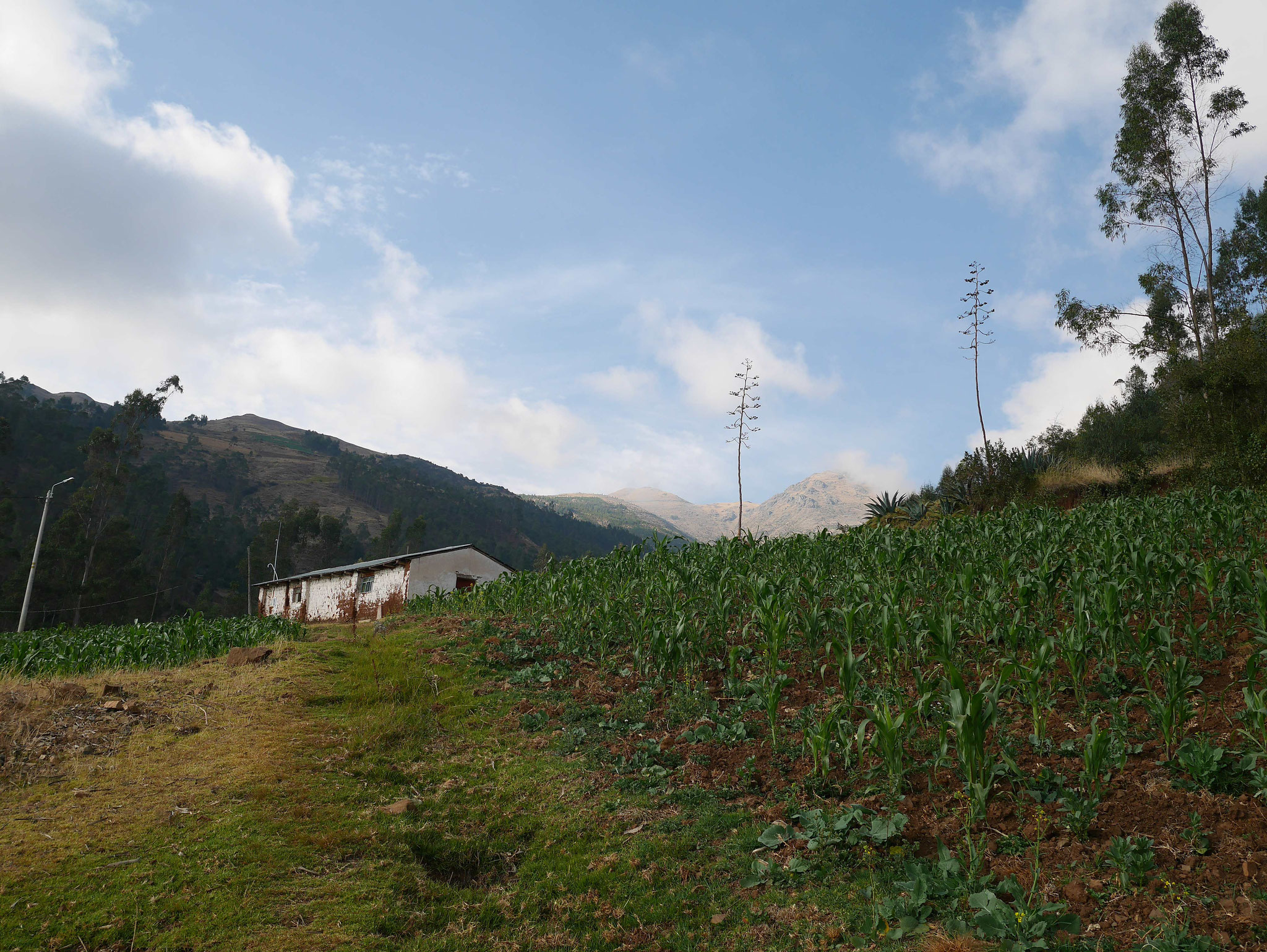 Ein Feld an unserem Weg. Die meisten Flächen in diesem Ort werden für den landwirtschaftlichen Anbau genutzt.