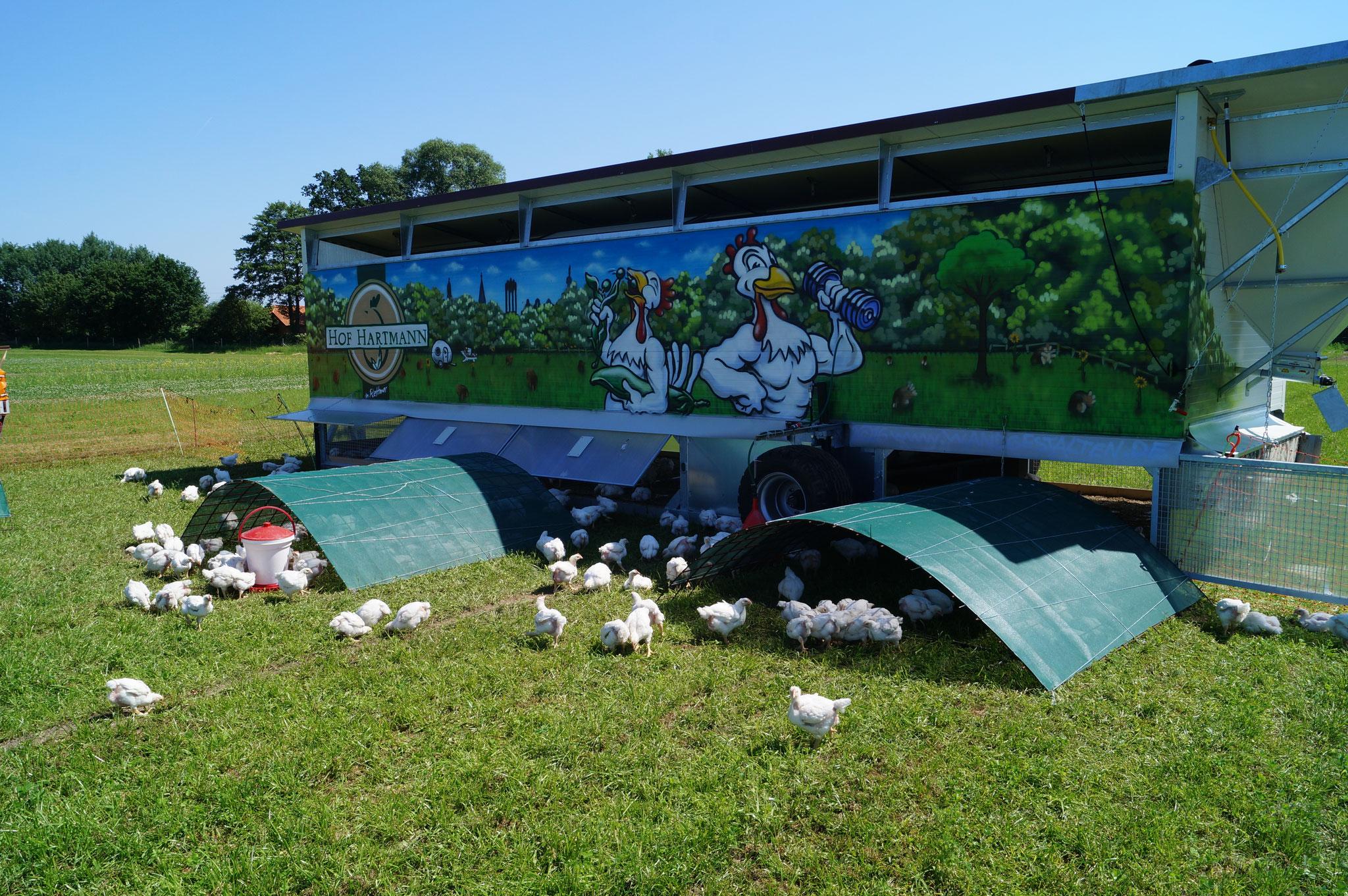 Hartmanns Hähnchen und ihr mobiles Hühnerhotel