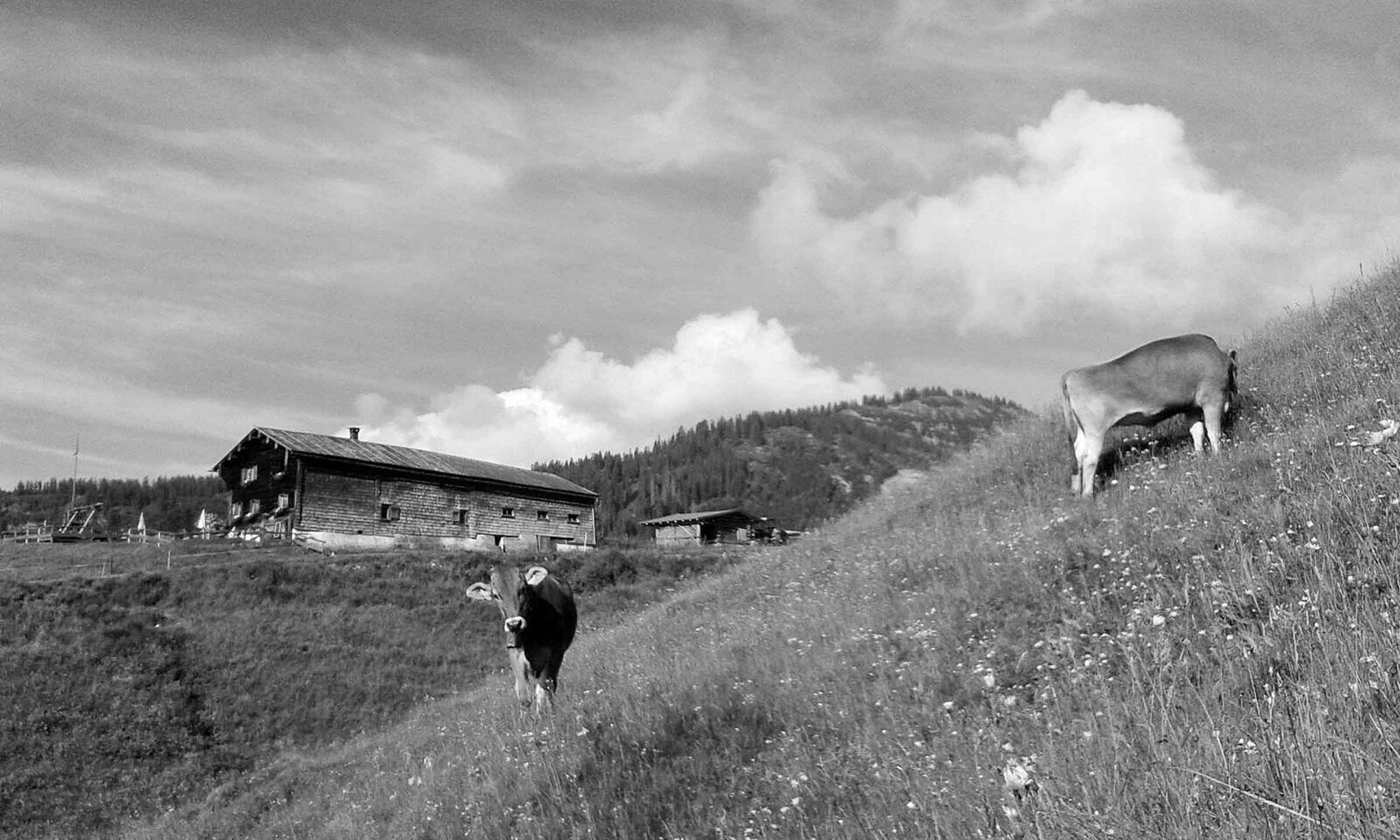 Alpe Osterberg, zwischen Oberstdorf und Riezlern im Kleinwalsertal