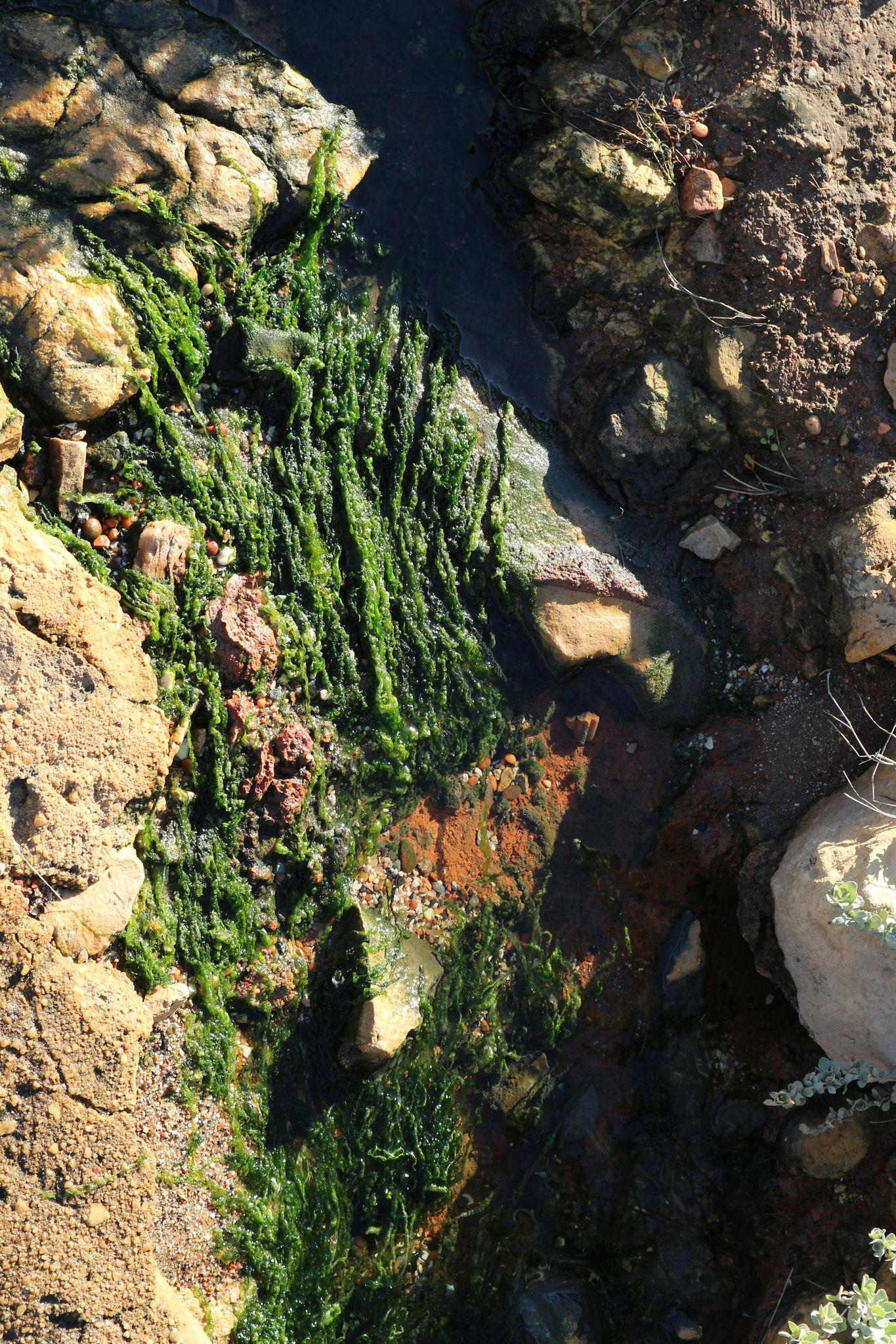 Manchmal lohnt sich auch ein Blick auf den Boden und nicht nur raus aufs Meer...