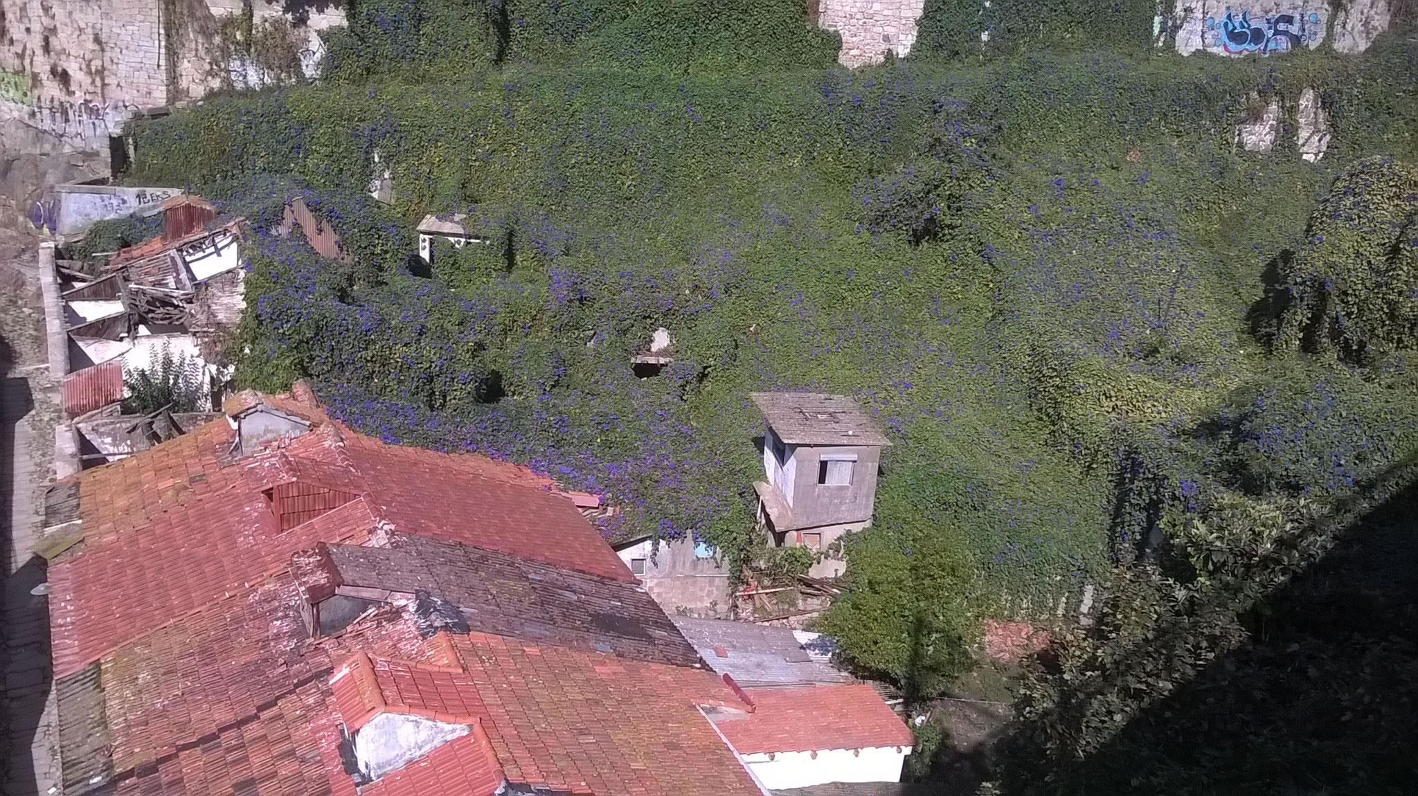 Man läuft in Porto an vielen heruntergekommenen Gebäuden vorbei und wundert sich teilweise, dass dort noch Leute drin leben. Und auf diesen 2 Fotos, sieht man faszinierende Stellen, wo die Natur sich ganze Häuser zurückerobert hat.