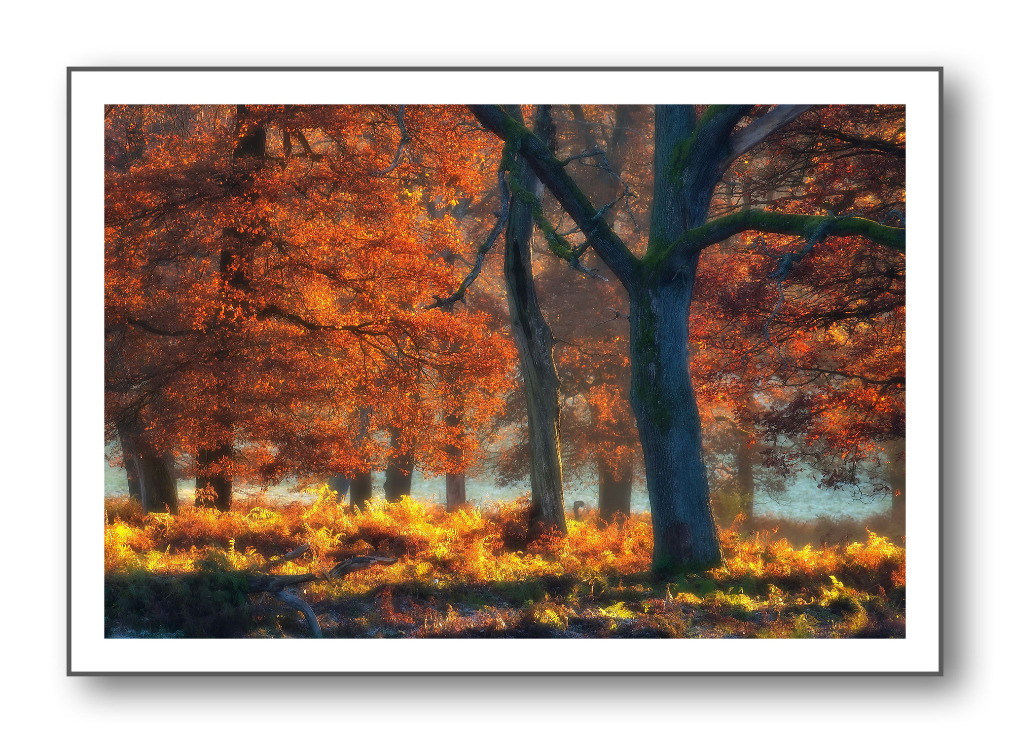Mehr dieser Bilder unter : Natur - Baum+Wald