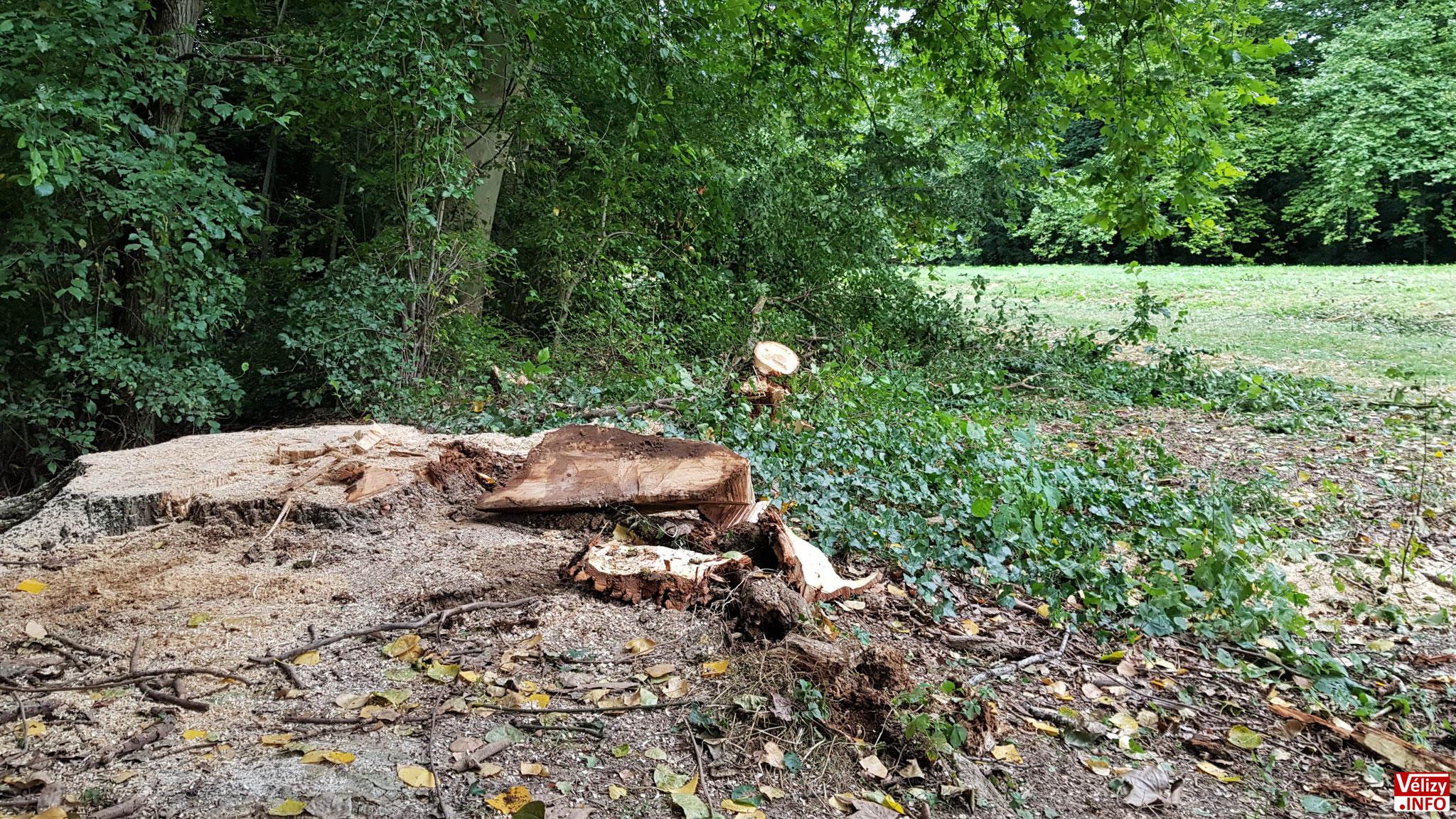 Abattage d'arbres à Vélizy-Villacoublay.