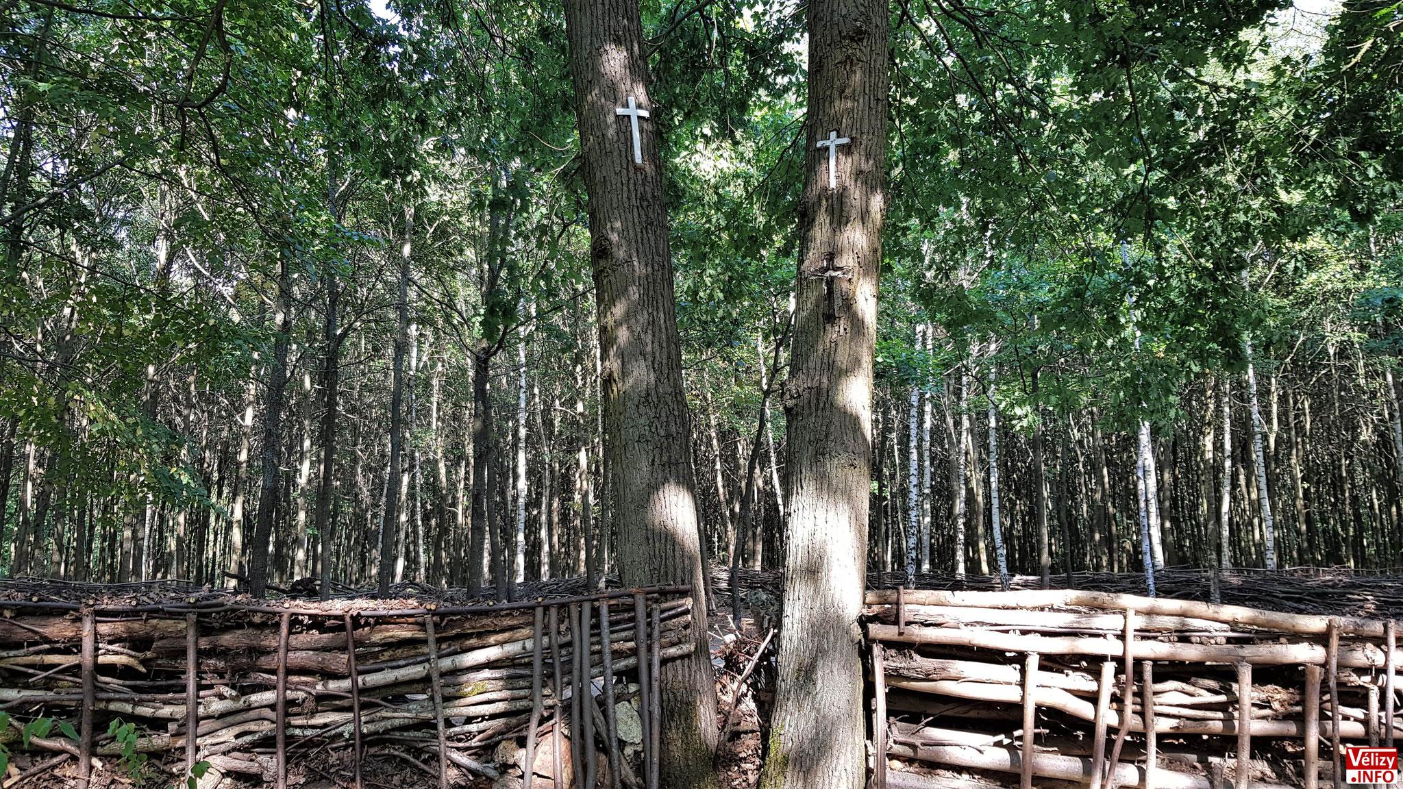 Des croix blanches sont fixées sur les troncs des arbres.