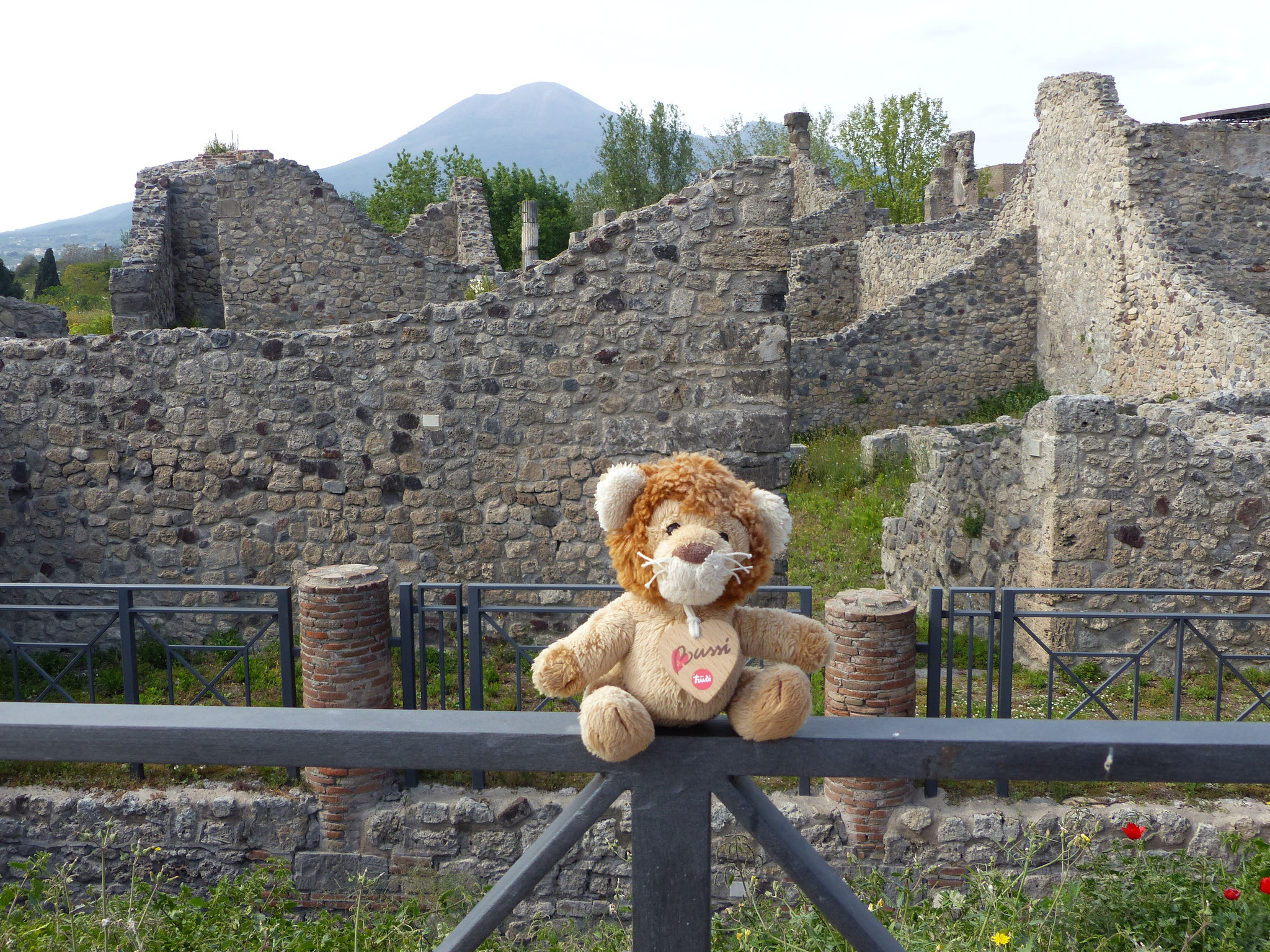 Löwekopp am Vesuv ;)