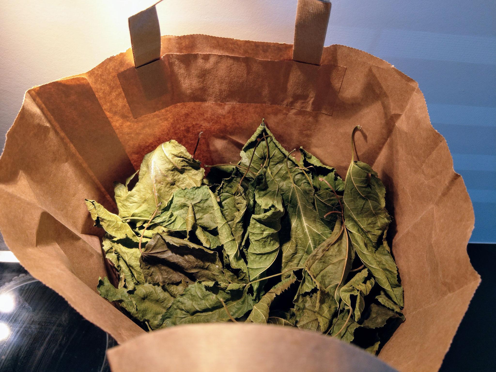 Man nehme den Sack mit den Maulbeerblättern und gibt soviele davon wie möglich in den Mixer