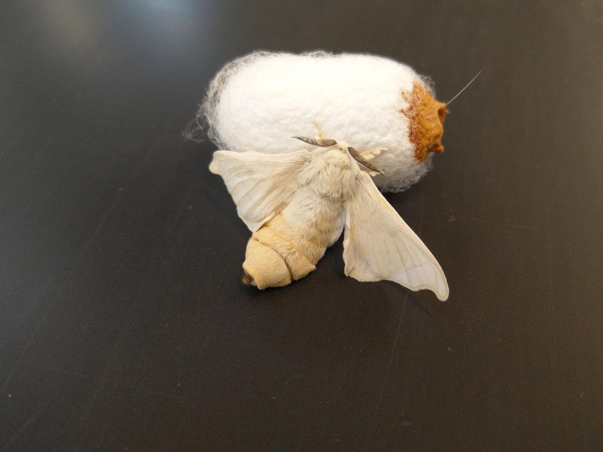 Tag 90: die Lebensdauer des Schmetterlings ist auf ein paar wenige Tage beschränkt