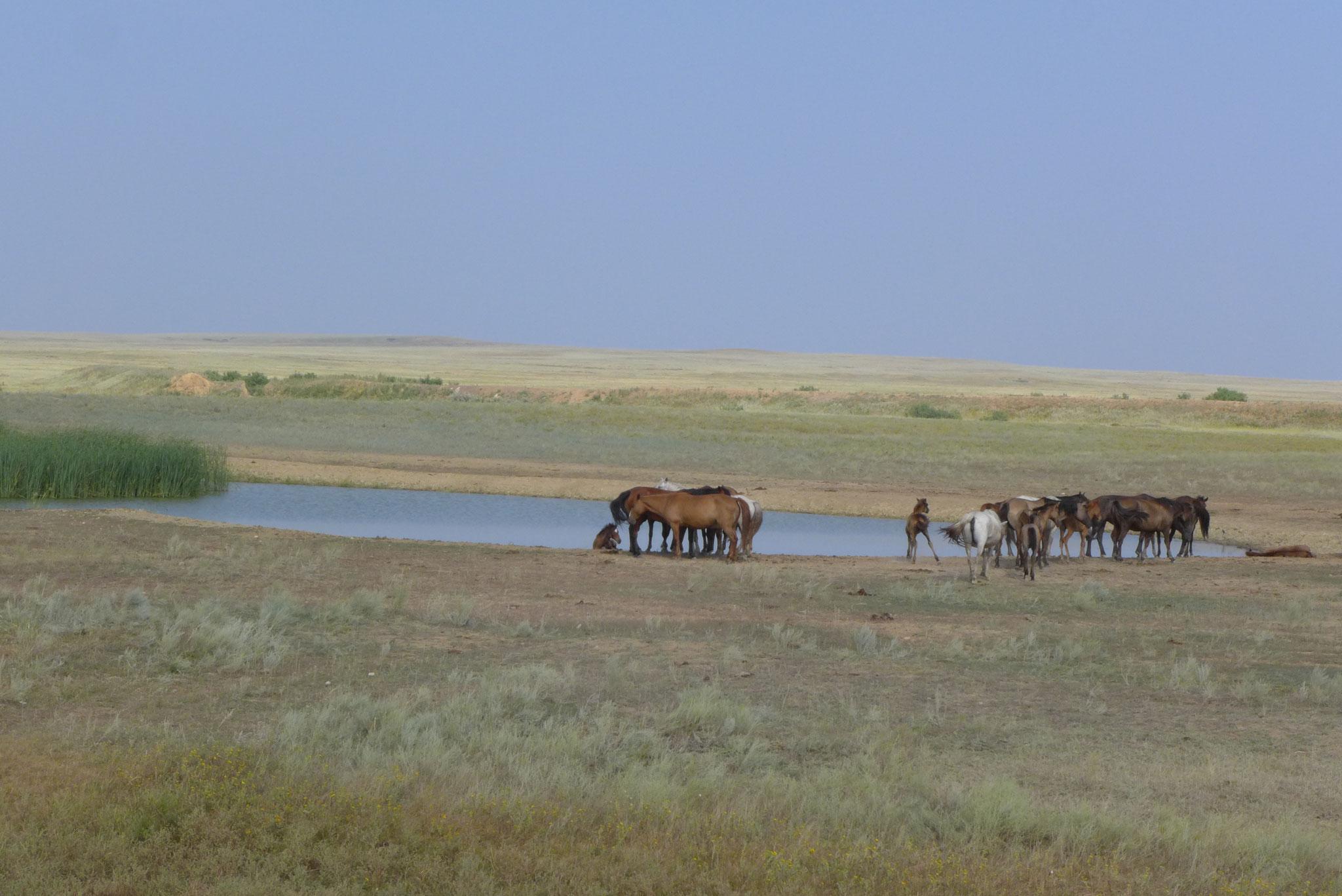 und noch mehr Pferde die einfach frei rum laufen.