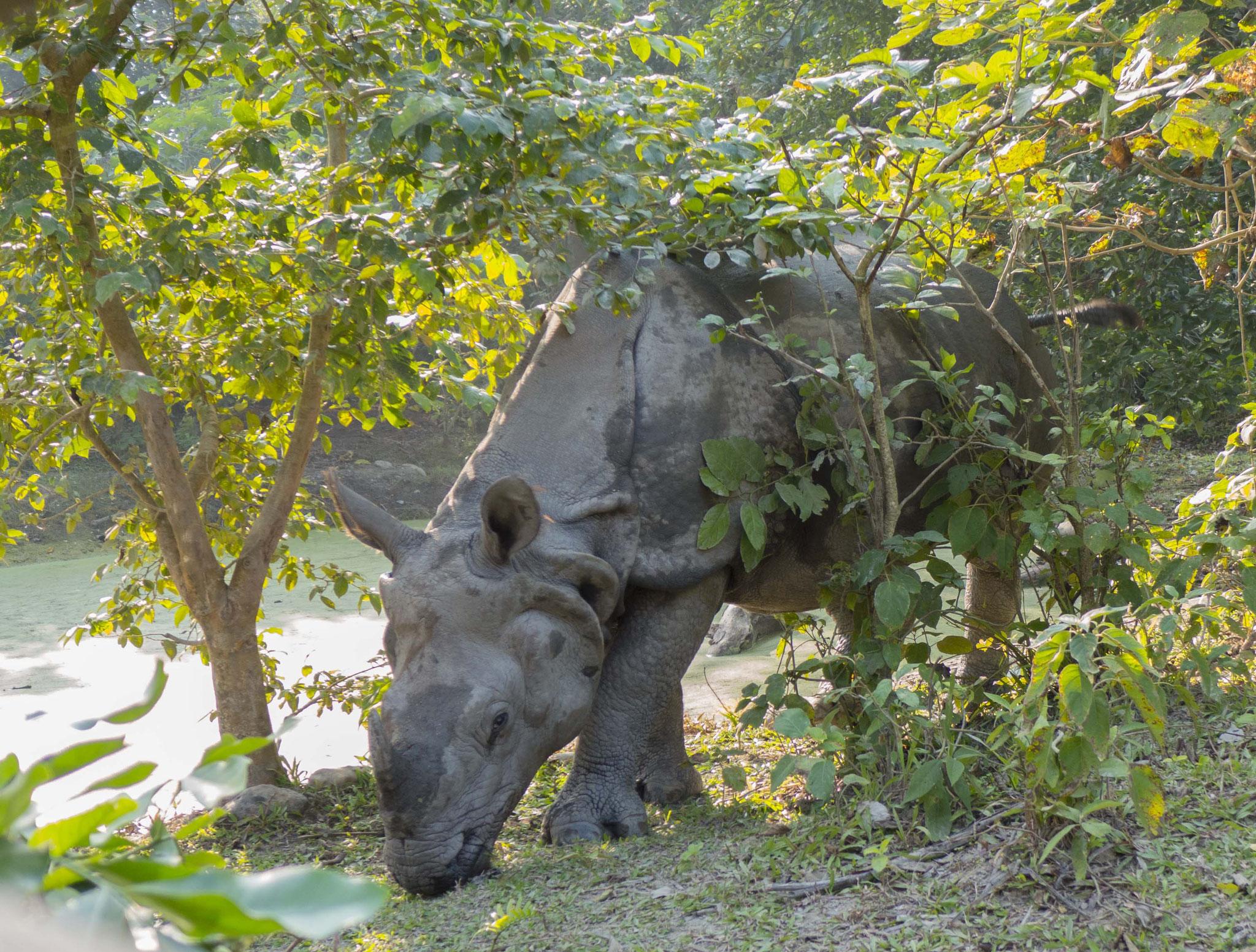 Und schauen beim blinden Nashorn ...