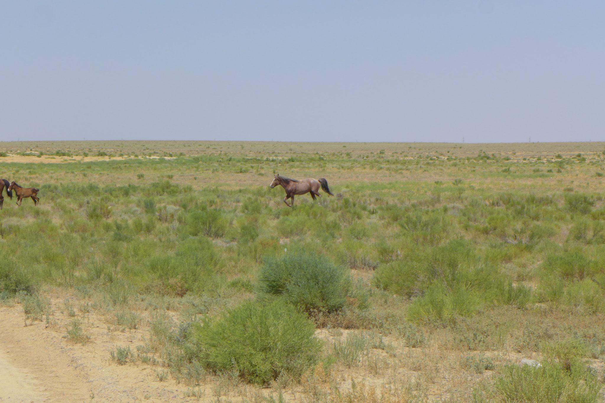 Alle paar Meter gibt es Pferde,