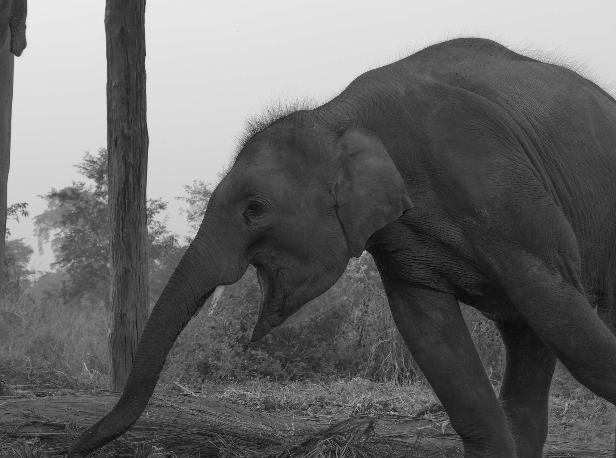 ... und den Elefanten vorbei.