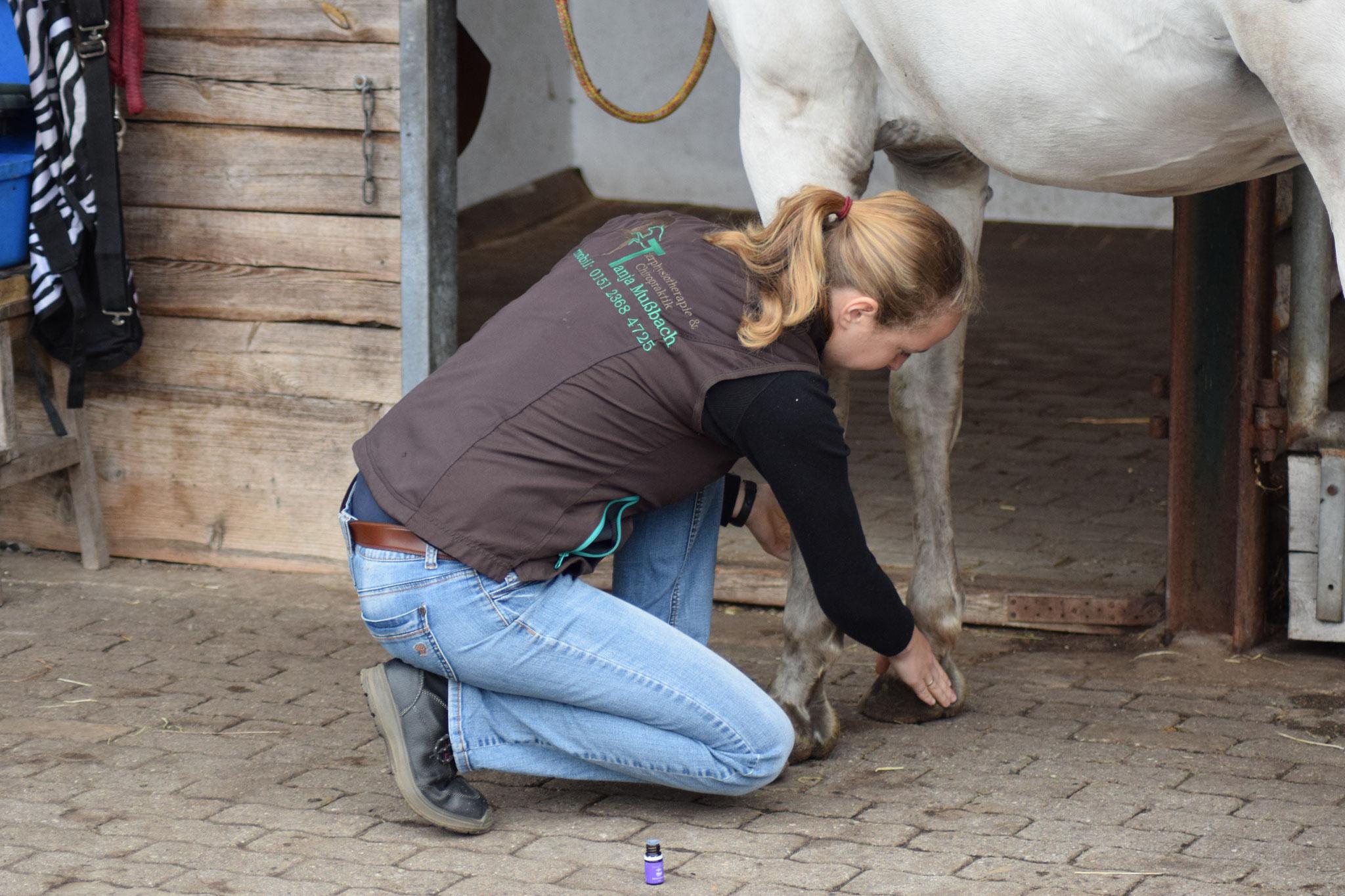 stoffwechsel anregen pferd