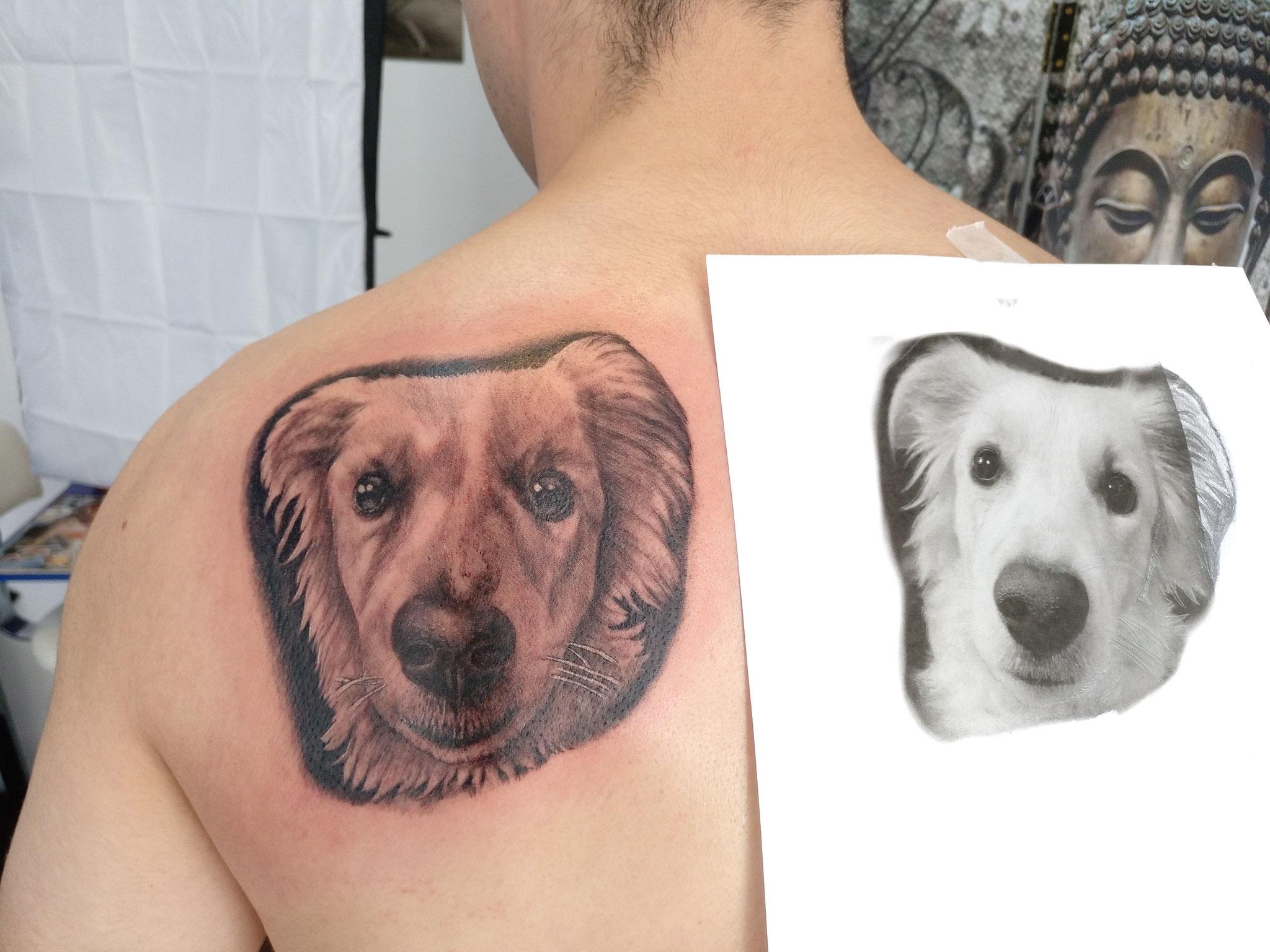 retrato perra