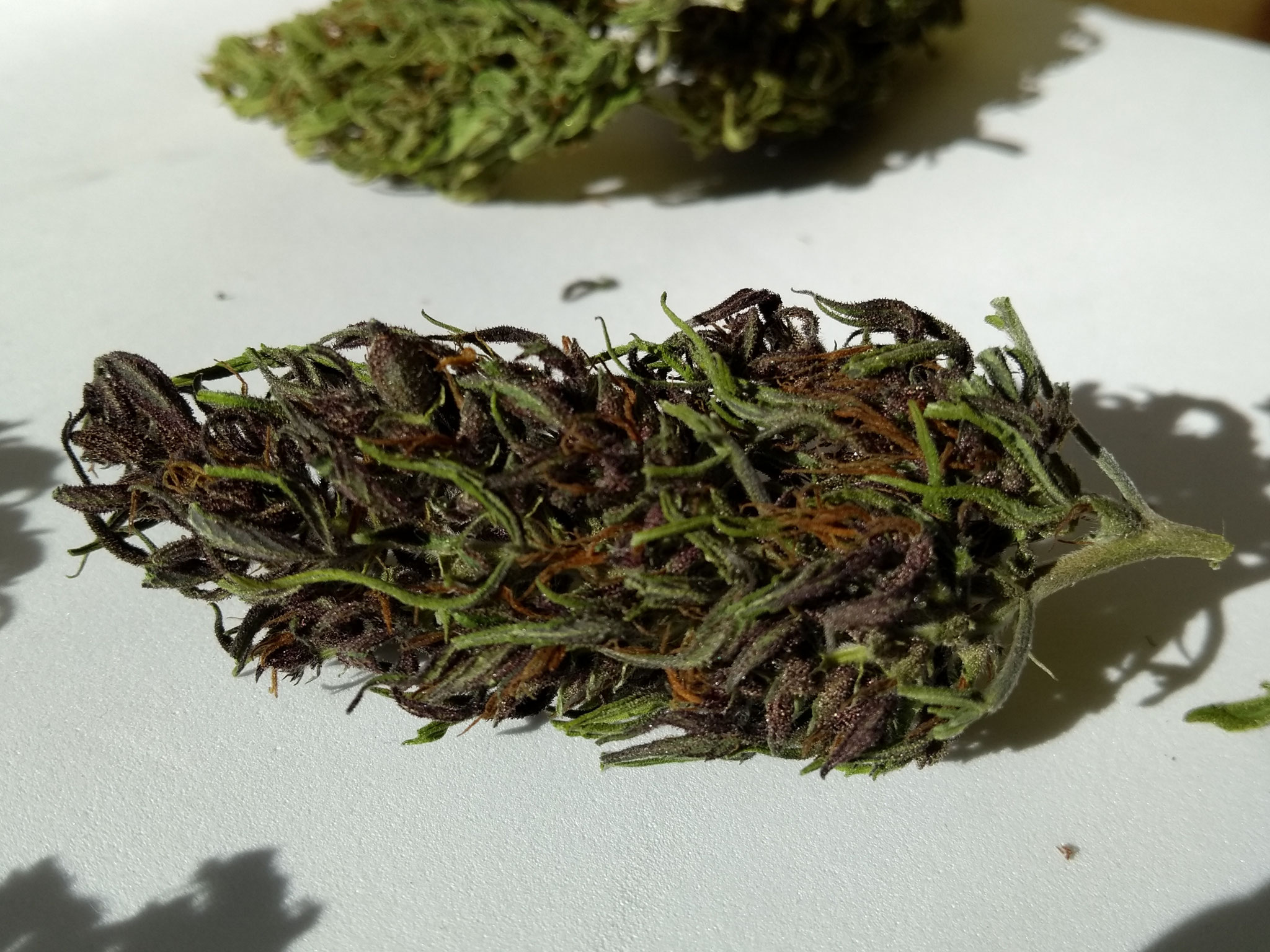 cnnabis light