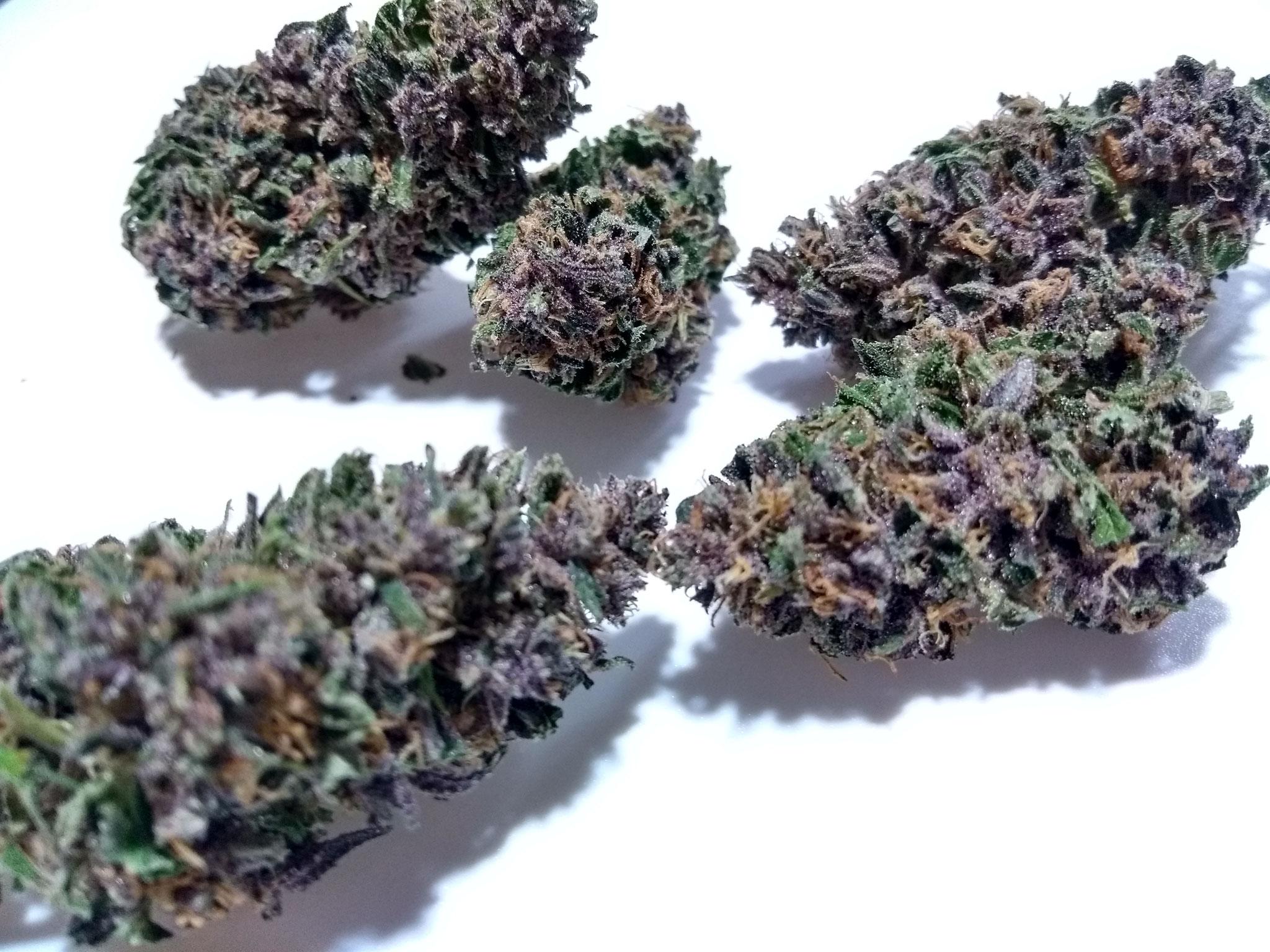 miglior purple