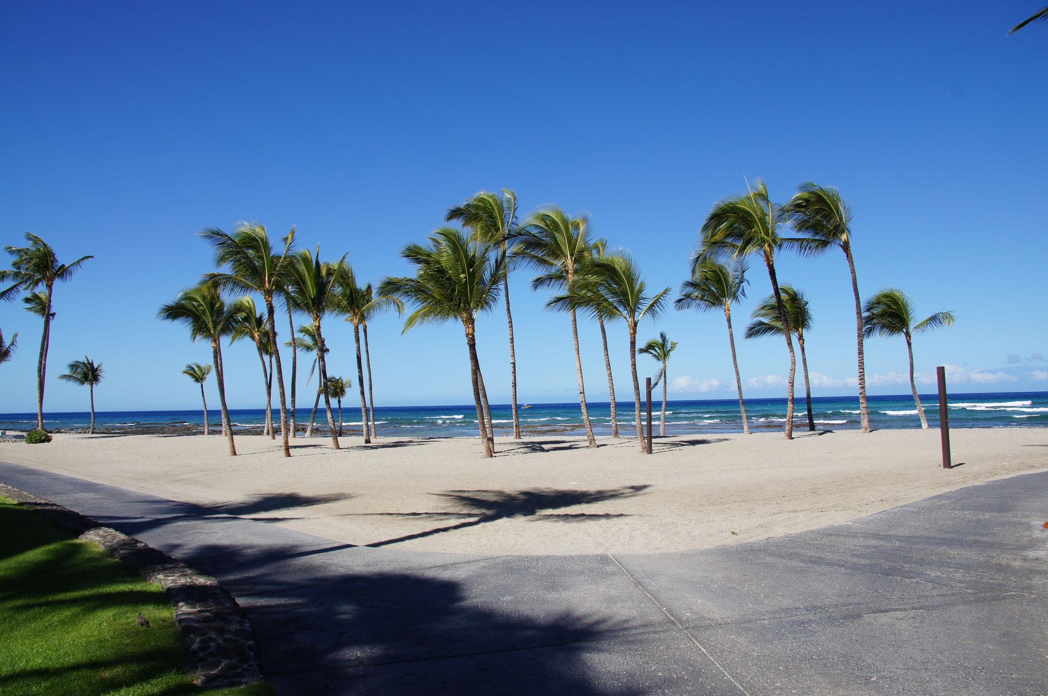 ein windiger Tag am Strand