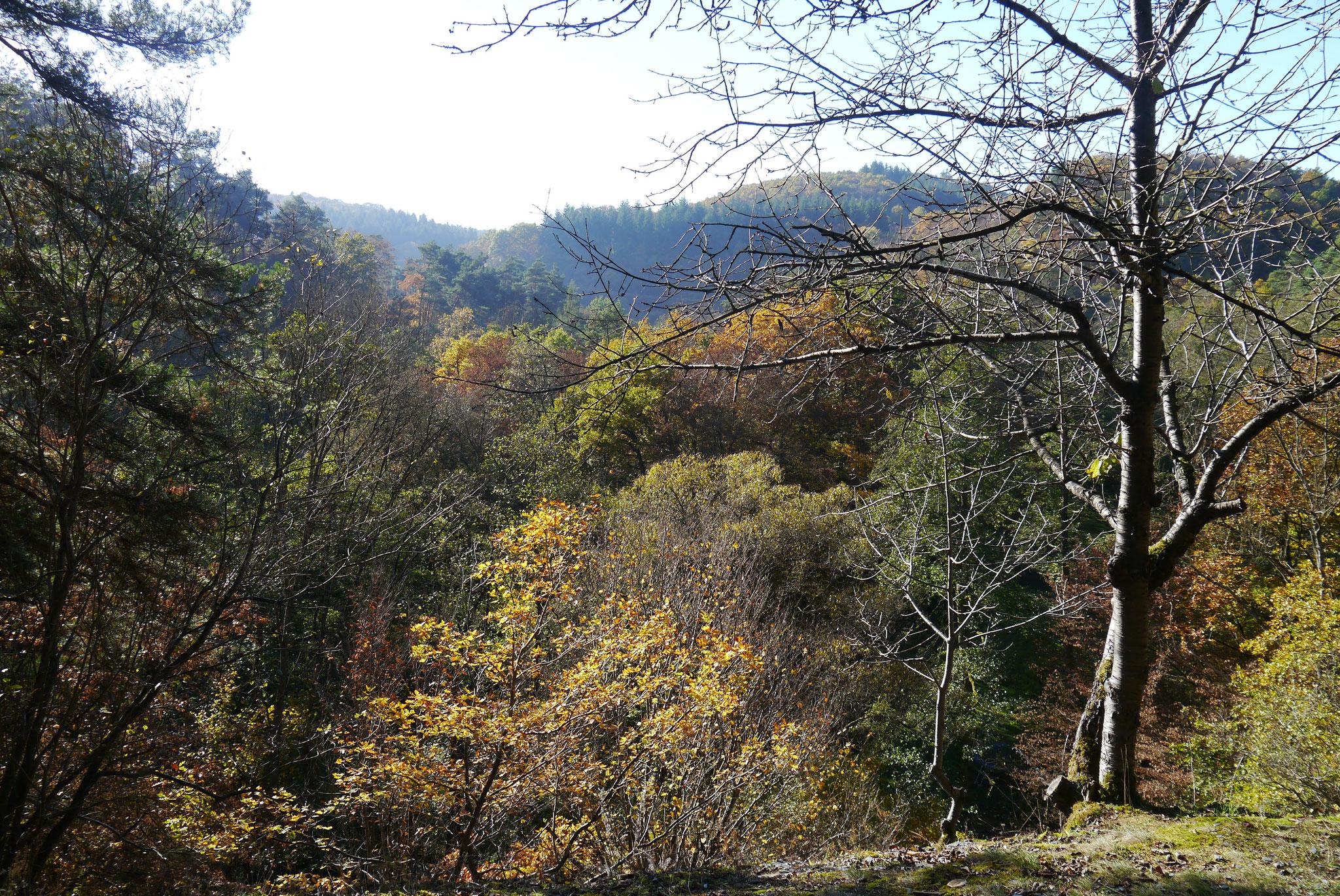 ...in der wunderschönen herbstlichen Eifel.