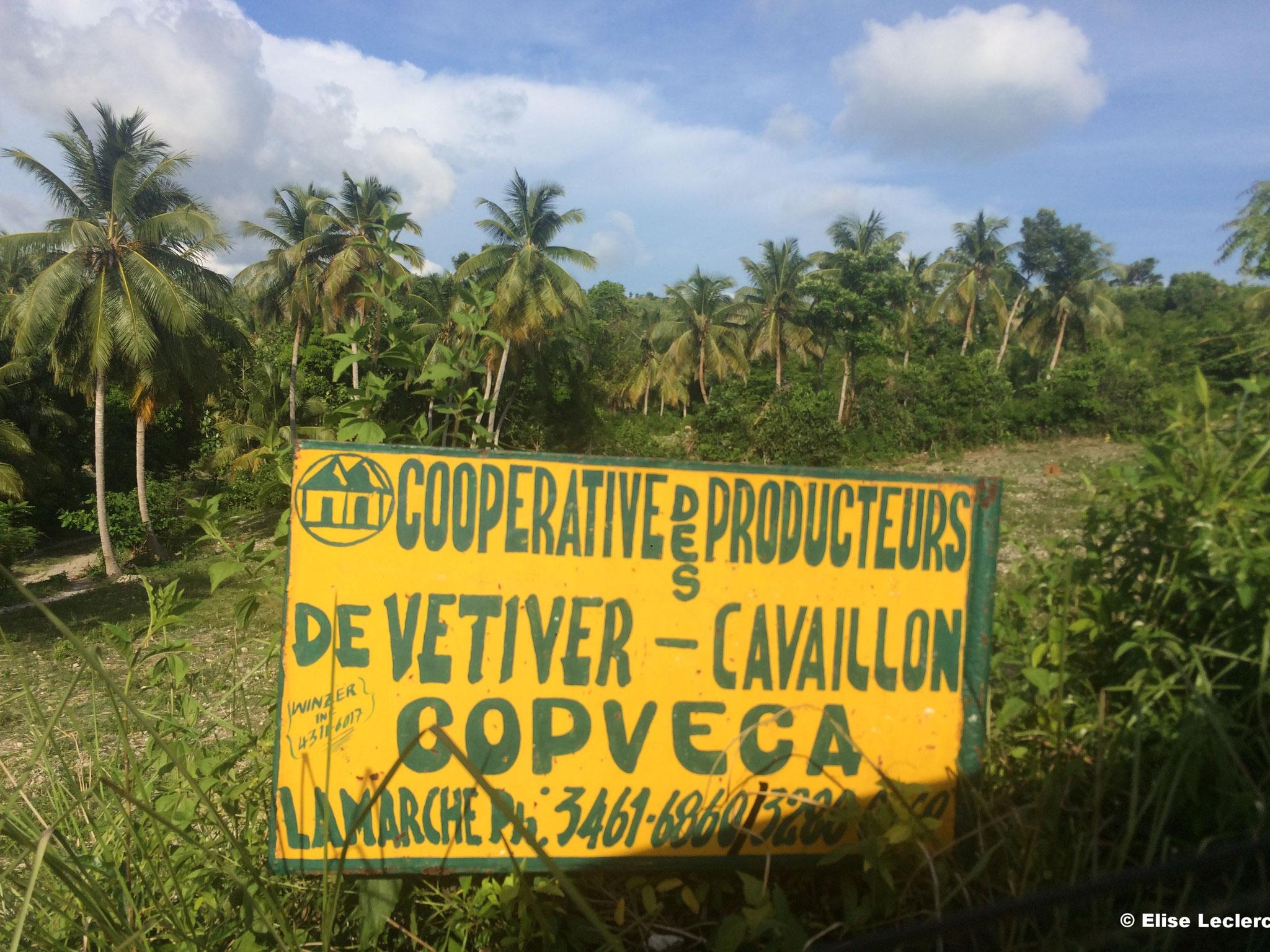 COPVECA - Coopérative de vétiver de Cavaillon