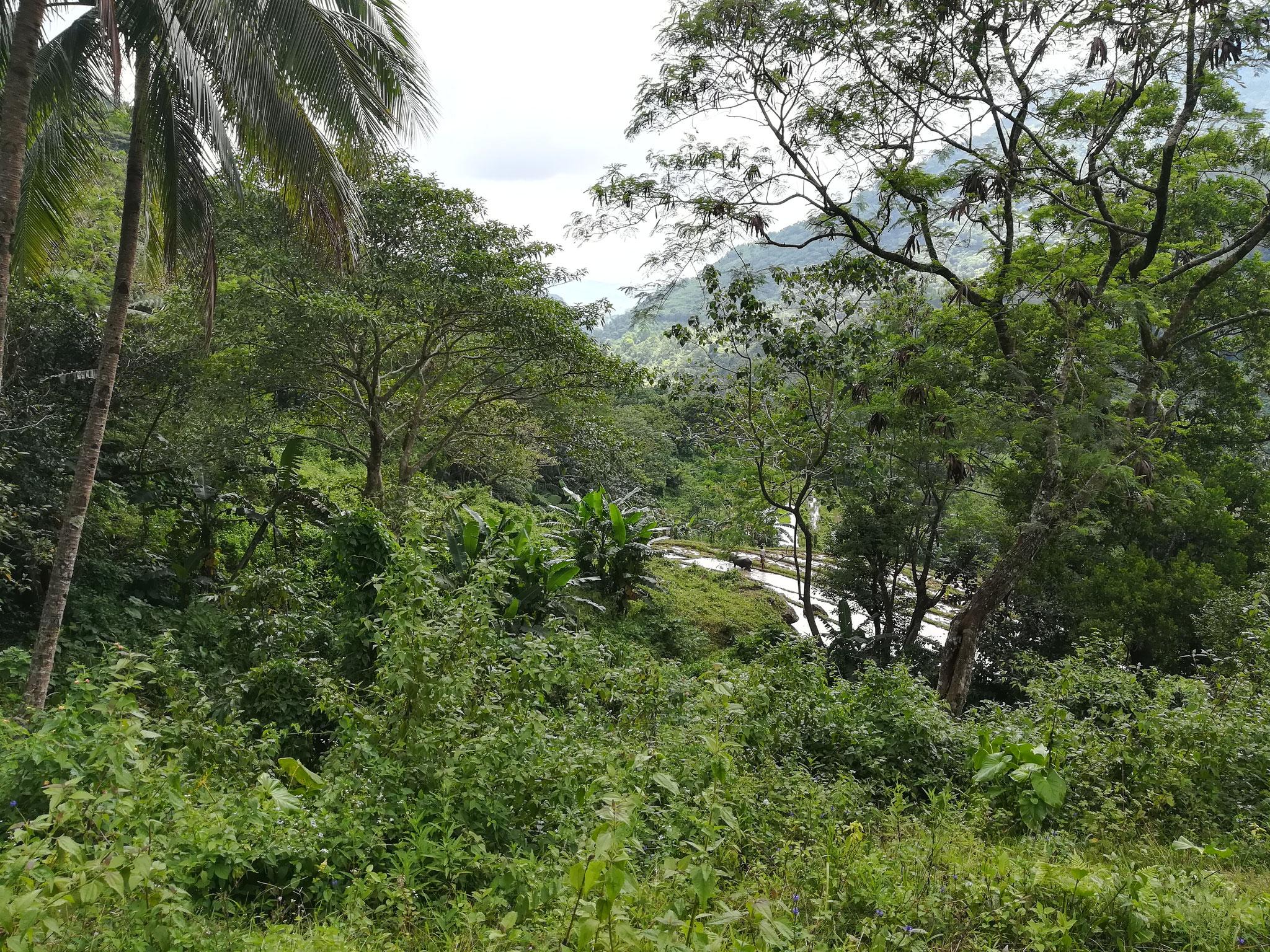 Auf dem Weg zum Wasserfall auf Negros